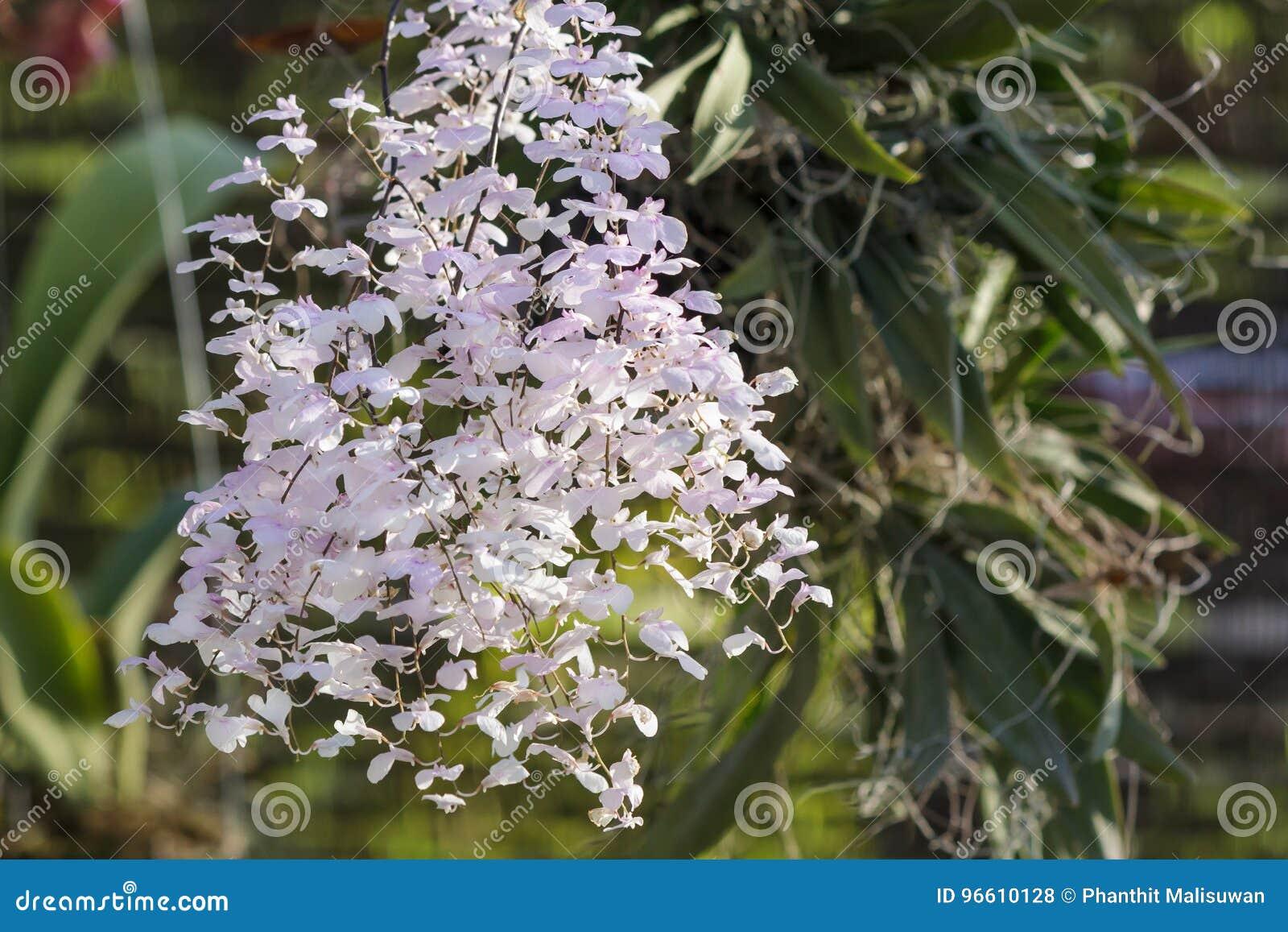Belle Fleur D\'orchidée Dans Le Jardin à L\'hiver Ou à La Journée De ...