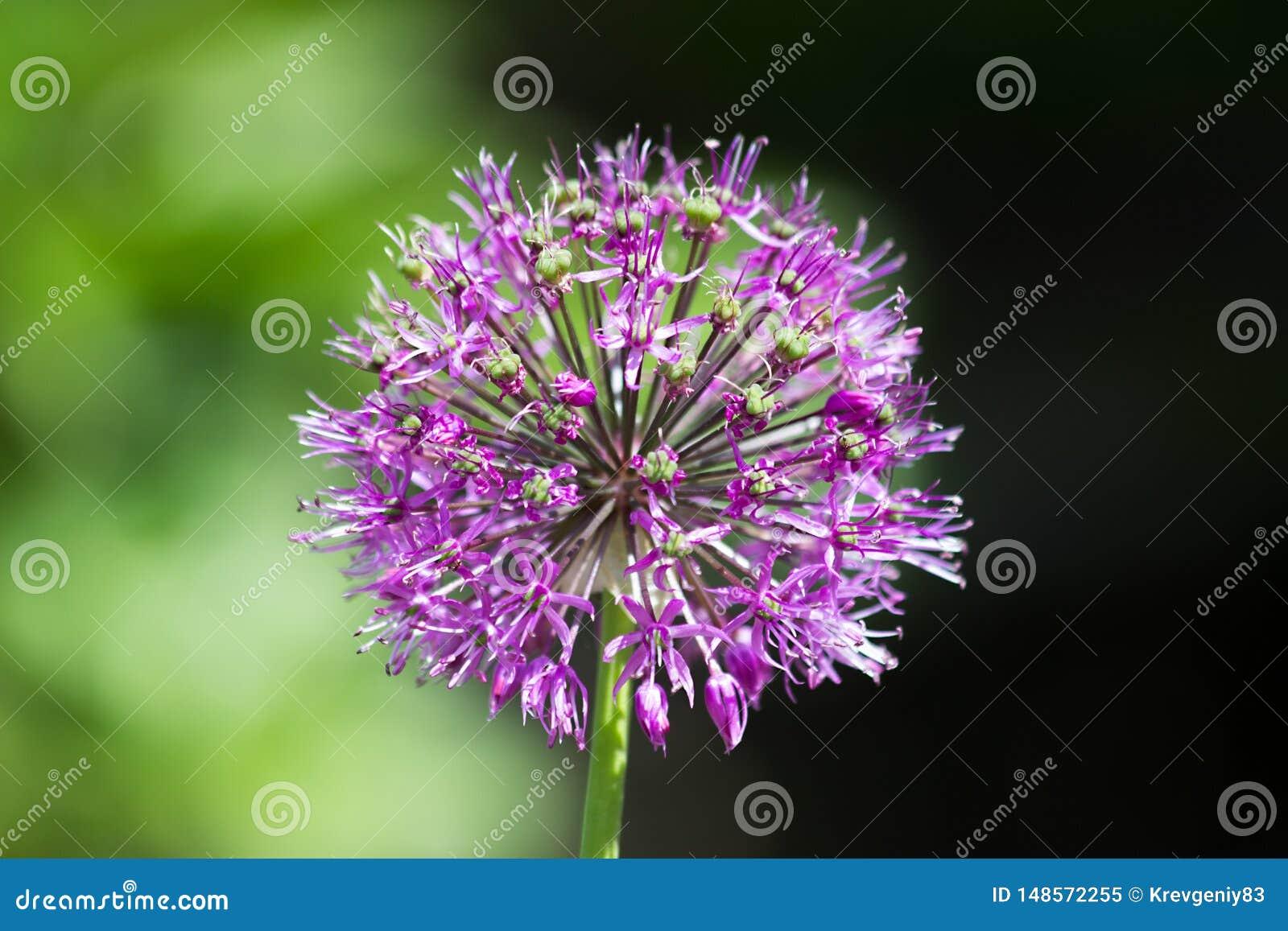 Belle fleur dans la lumière naturelle