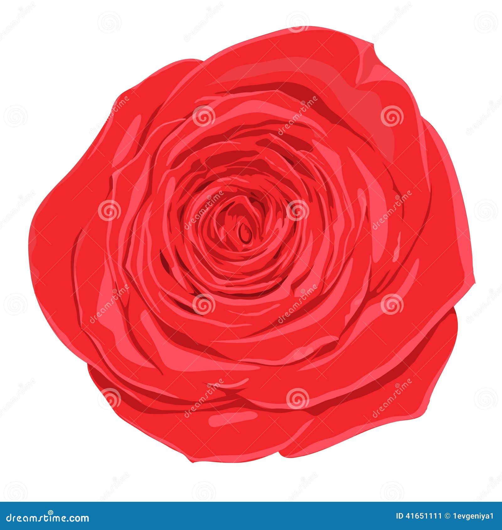 Belle fleur de rose de rouge avec l 39 effet d 39 un dessin d - Dessin de rose rouge ...