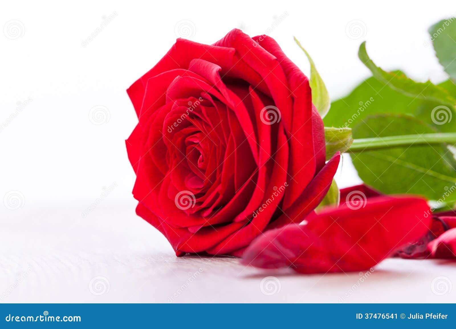 Belle Fleur De Rose De Rouge Sur Le Fond Noir Image Stock Image Du