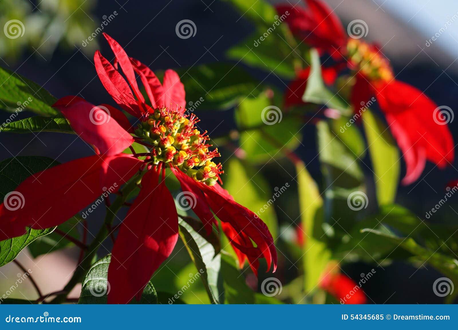 Belle Fleur Madagascar Image Stock Image Du Madagascar 54345685