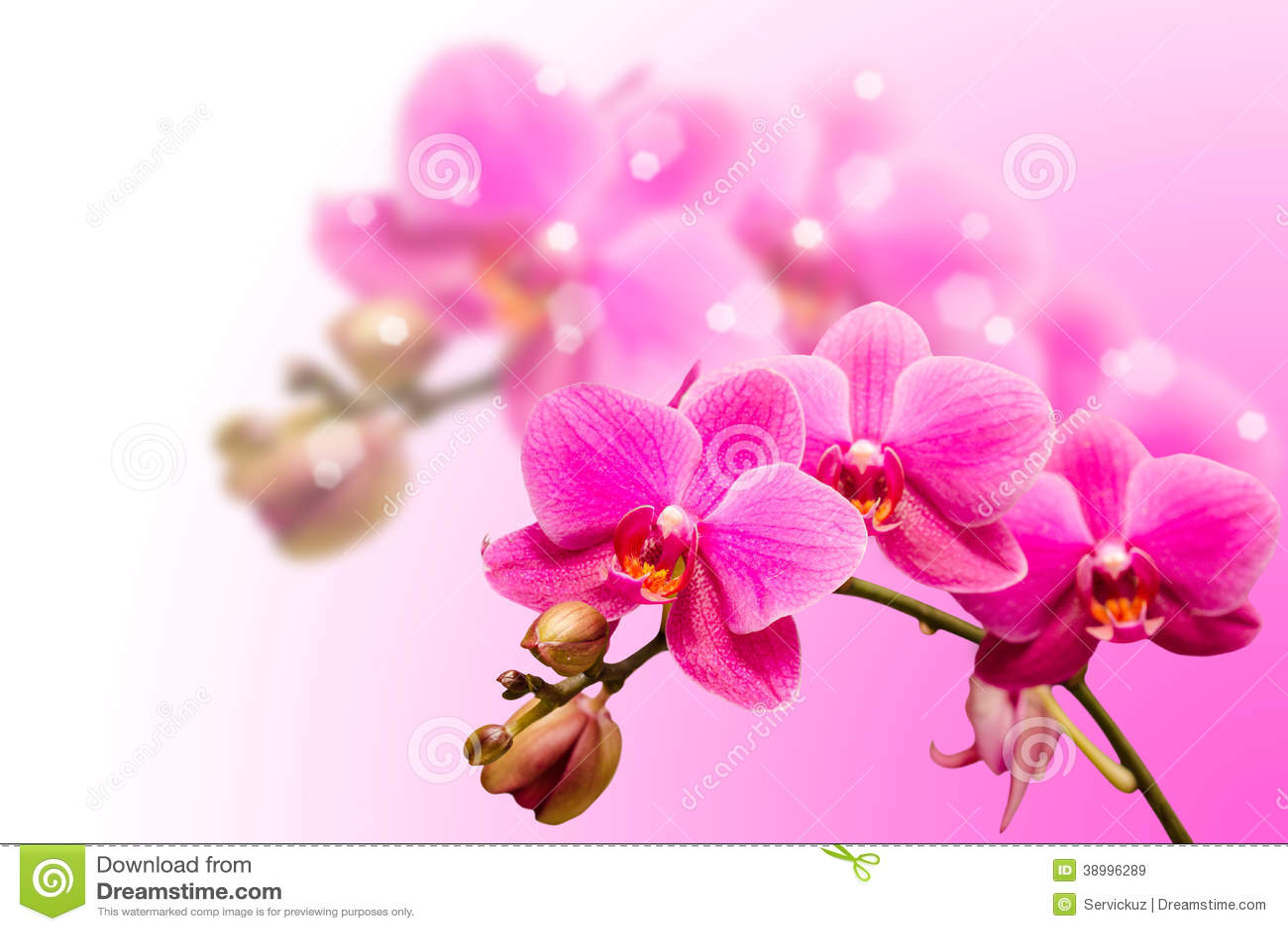 belle fleur pourpre romantique d 39 orchid e photo stock image 38996289. Black Bedroom Furniture Sets. Home Design Ideas