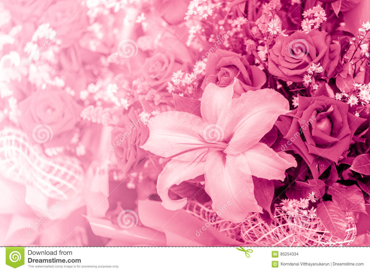 Belle Fleur Rose De Ton De Couleur D Amour Photo Stock Image Du
