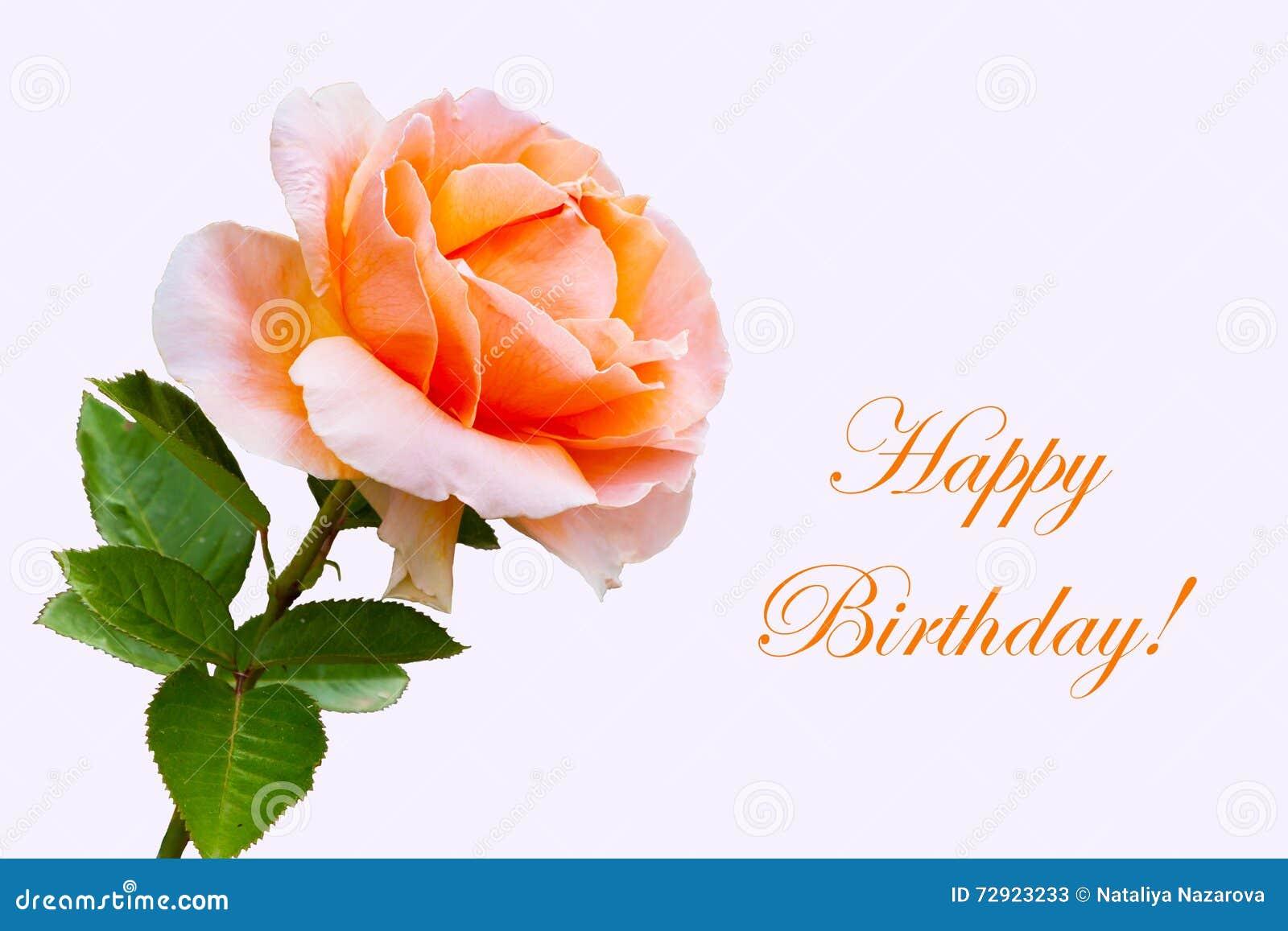 Belle Fleur Rose En Gros Plan Carte De Joyeux Anniversaire Image