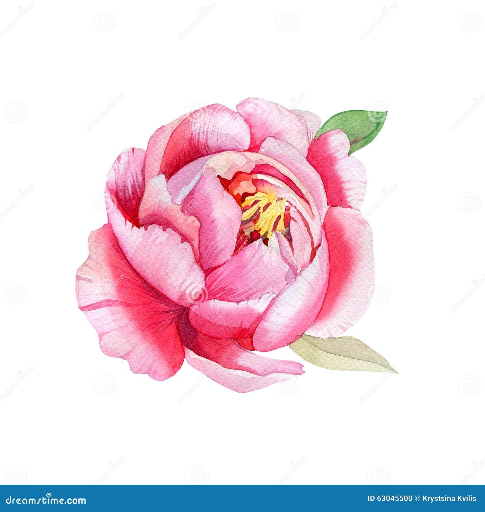 Belle fleur rose peinture d 39 aquarelle illustration stock for Aquarelle fleurs