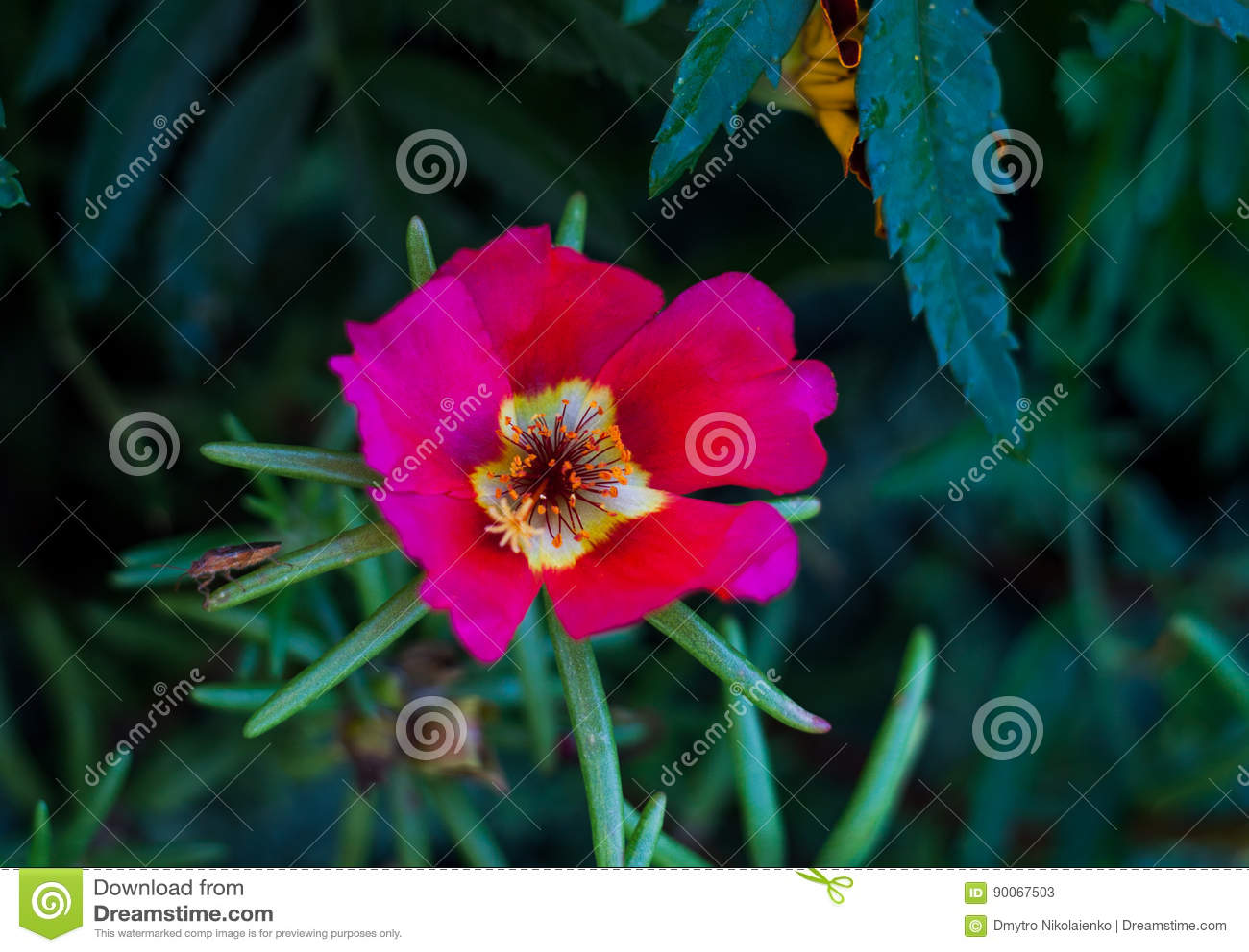 belle fleur rose scarabée rampant sur une feuille verte abrégez le