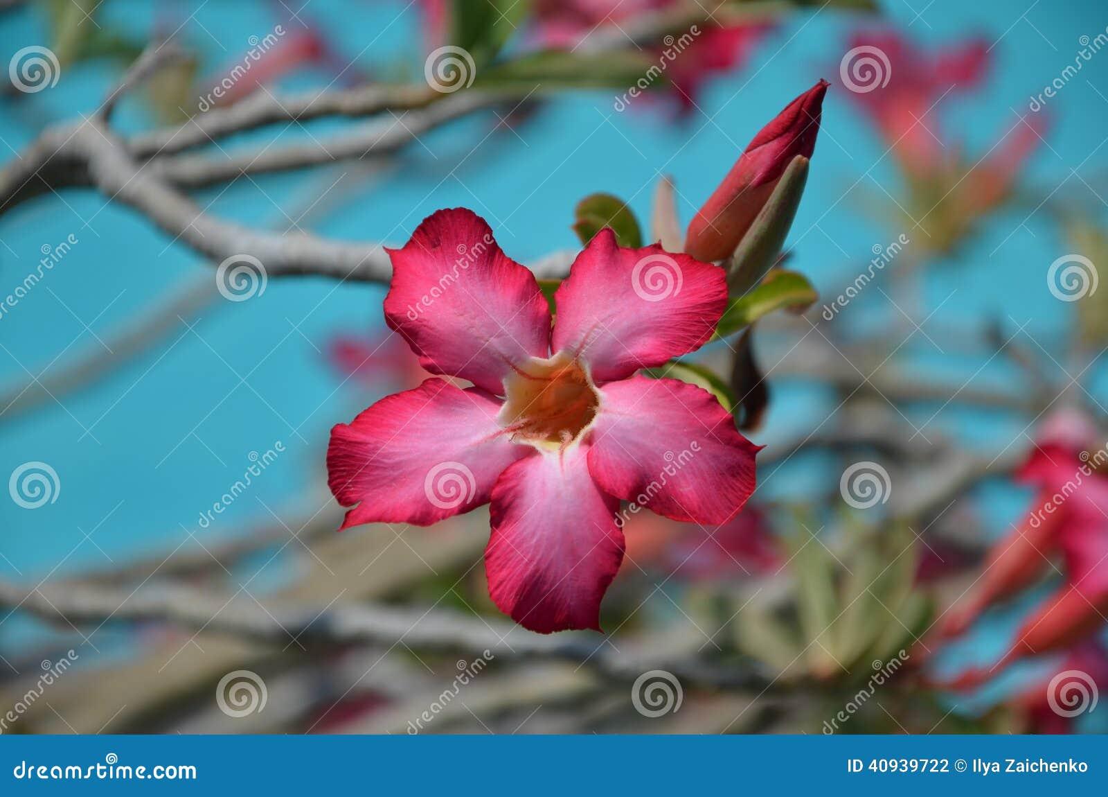 Belle Fleur Rose Sur L Arbre Photo Stock Image Du Jardin Fleur
