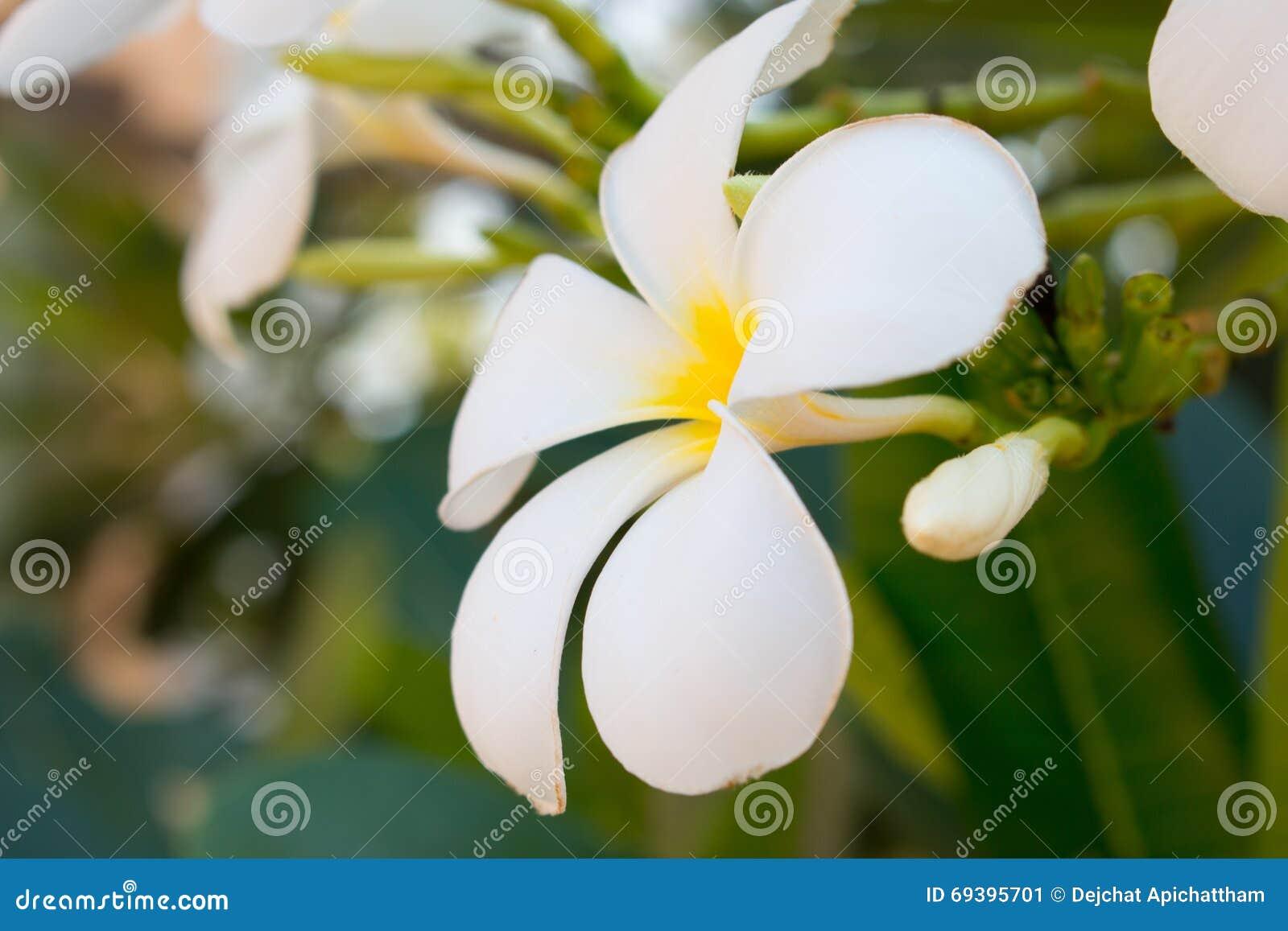 Belle Fleur Tropicale Blanche Image Stock Image Du Decoration