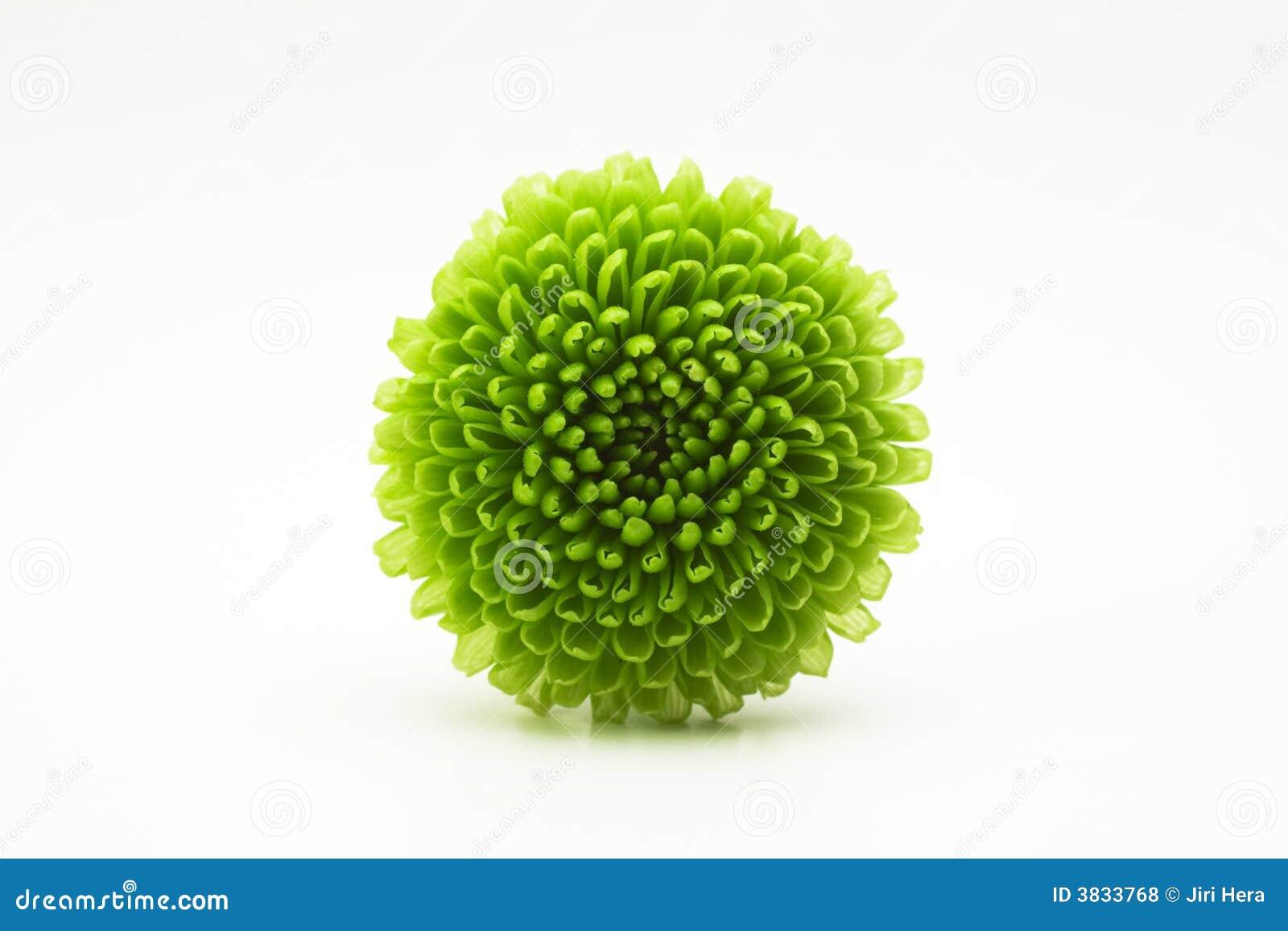 Fleur Verte Nom Signification Des Fleurs Maison Retraite Champfleuri