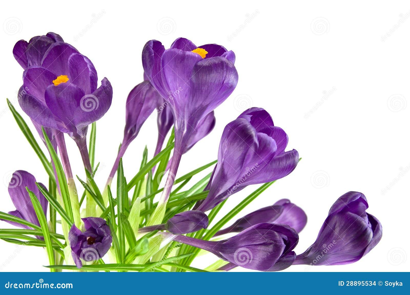 Belle fleur violette photo stock image du botanique - Image fleur violette ...