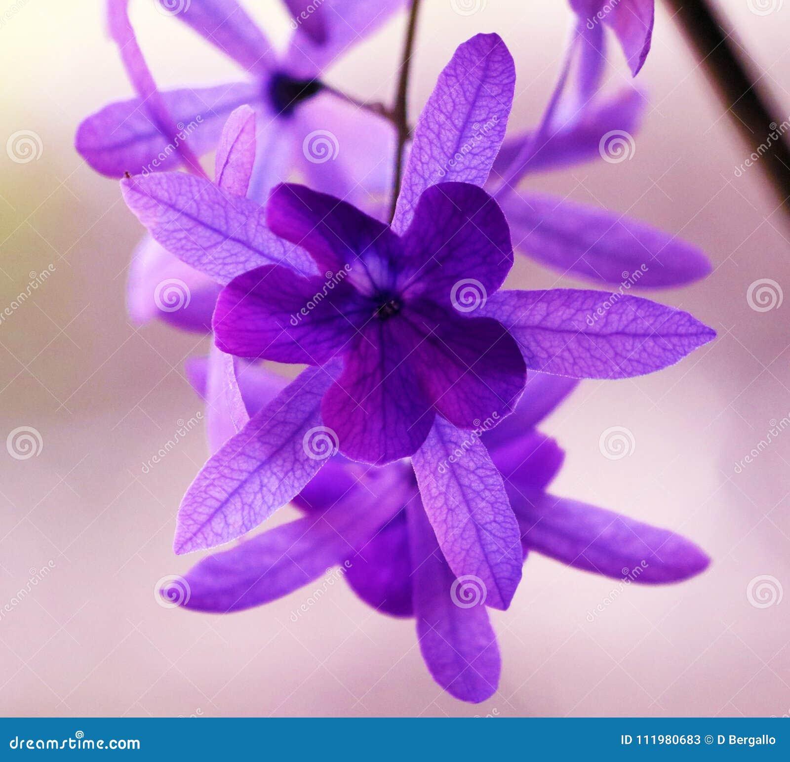 Belle fleur violette pourpre, nature magnifique