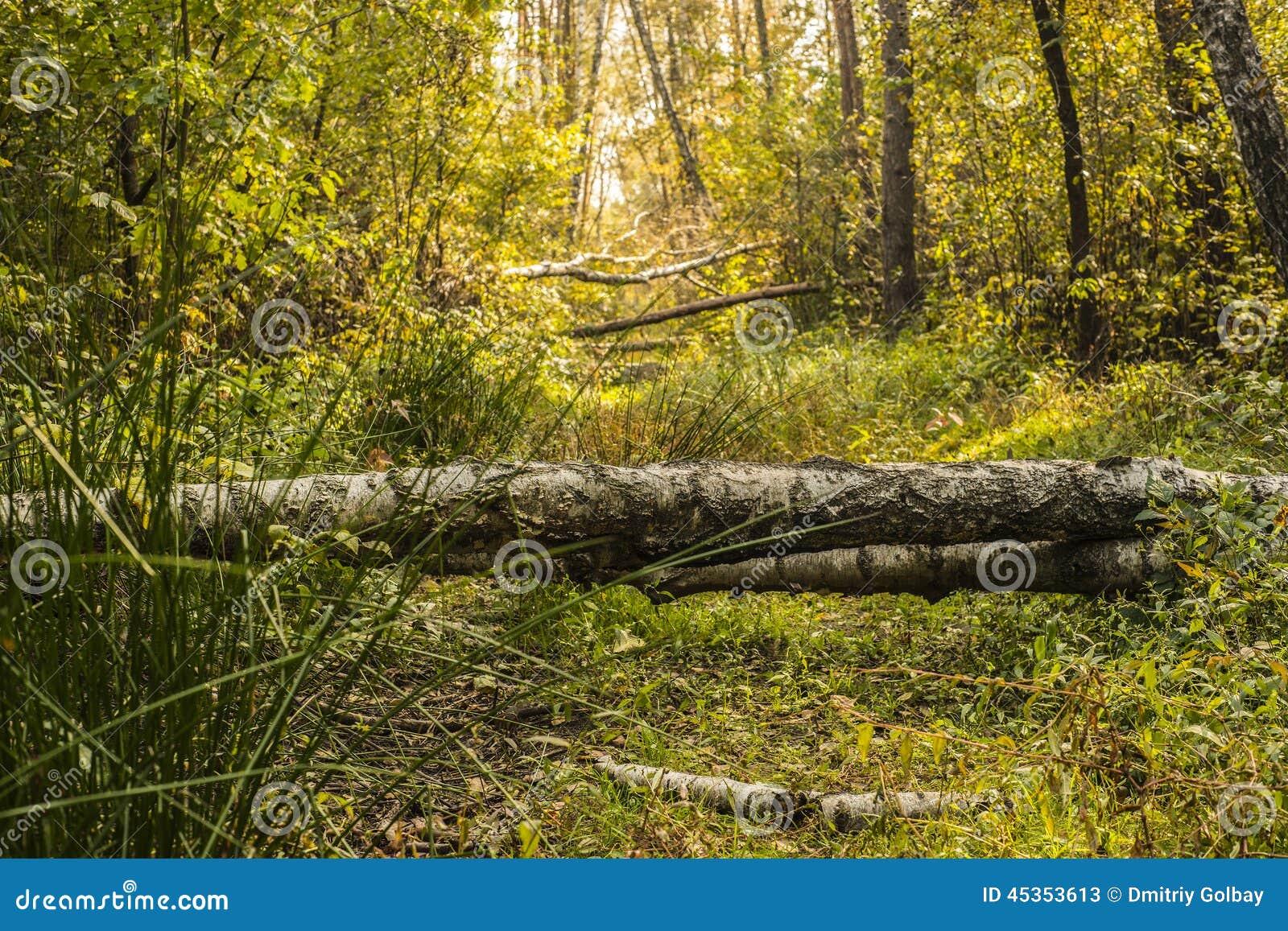 Belle forêt d automne