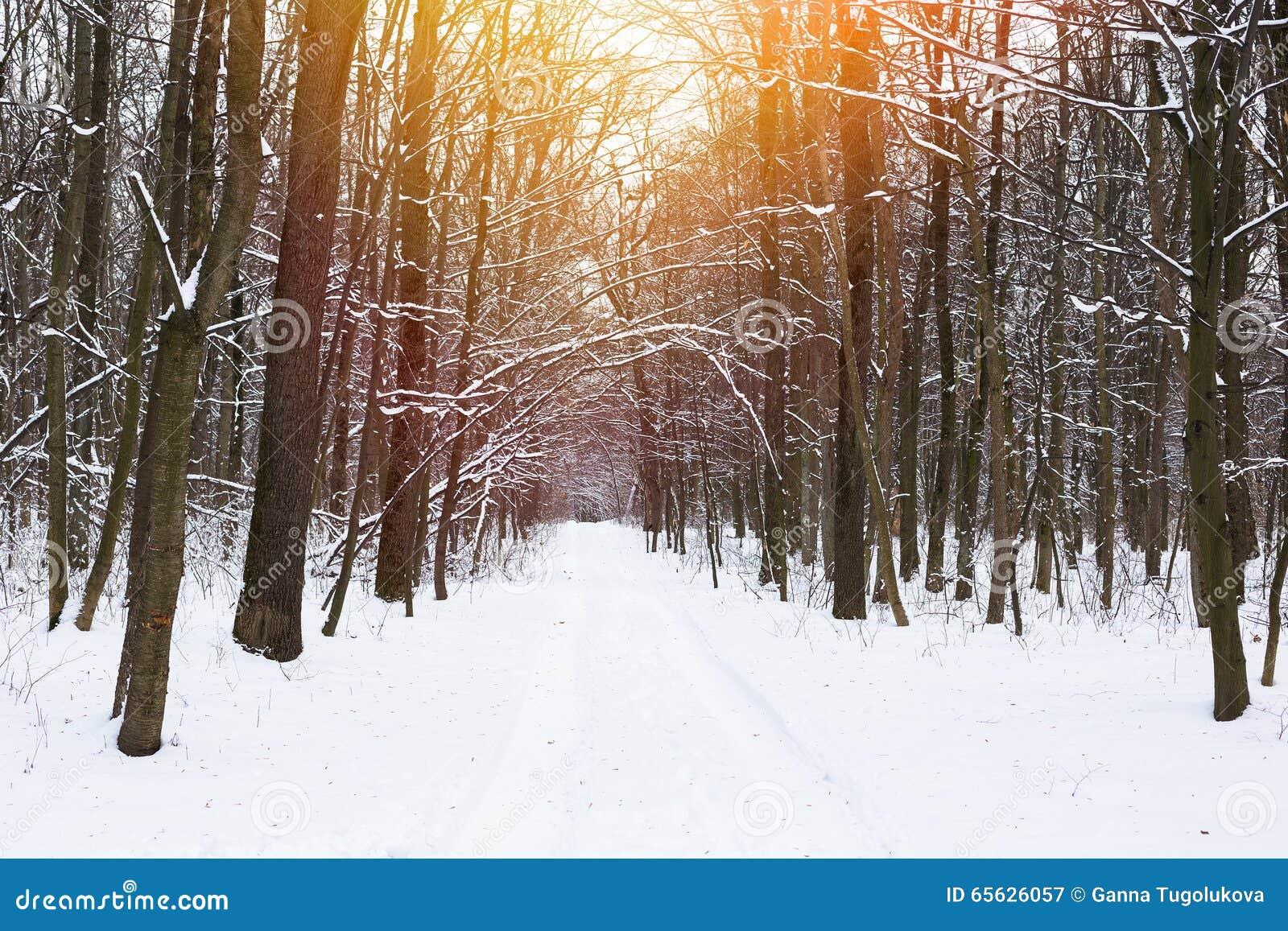 Belle forêt de chute de neige par temps calme d hiver