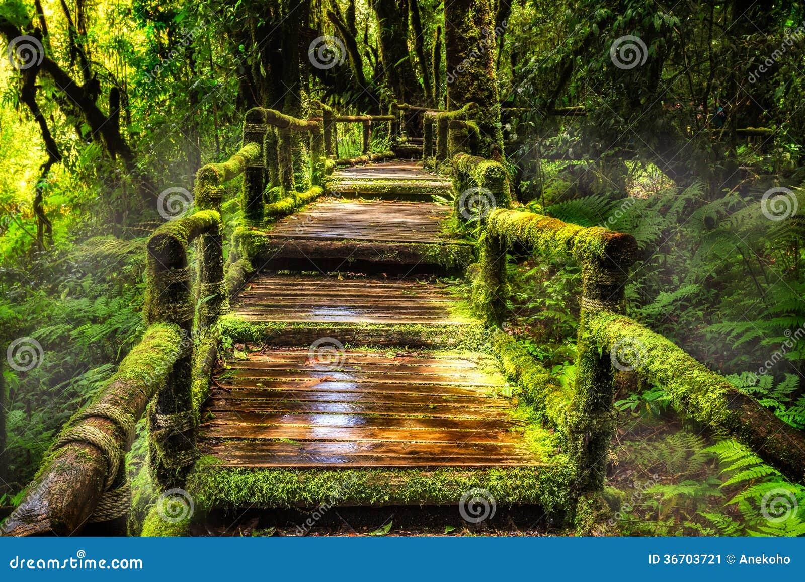 Belle forêt tropicale à l itinéraire aménagé pour amateurs de la nature de ka d ANG