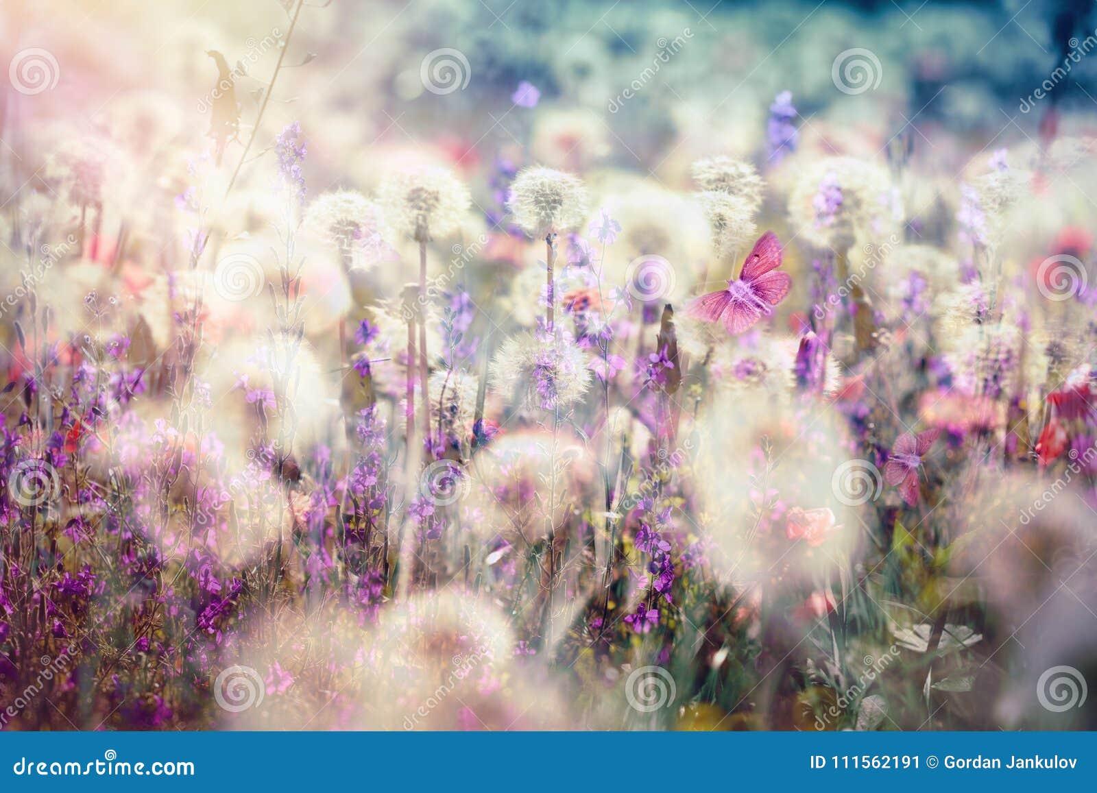 Belle graine de pissenlit de paysage au printemps -, boule pelucheuse de coup