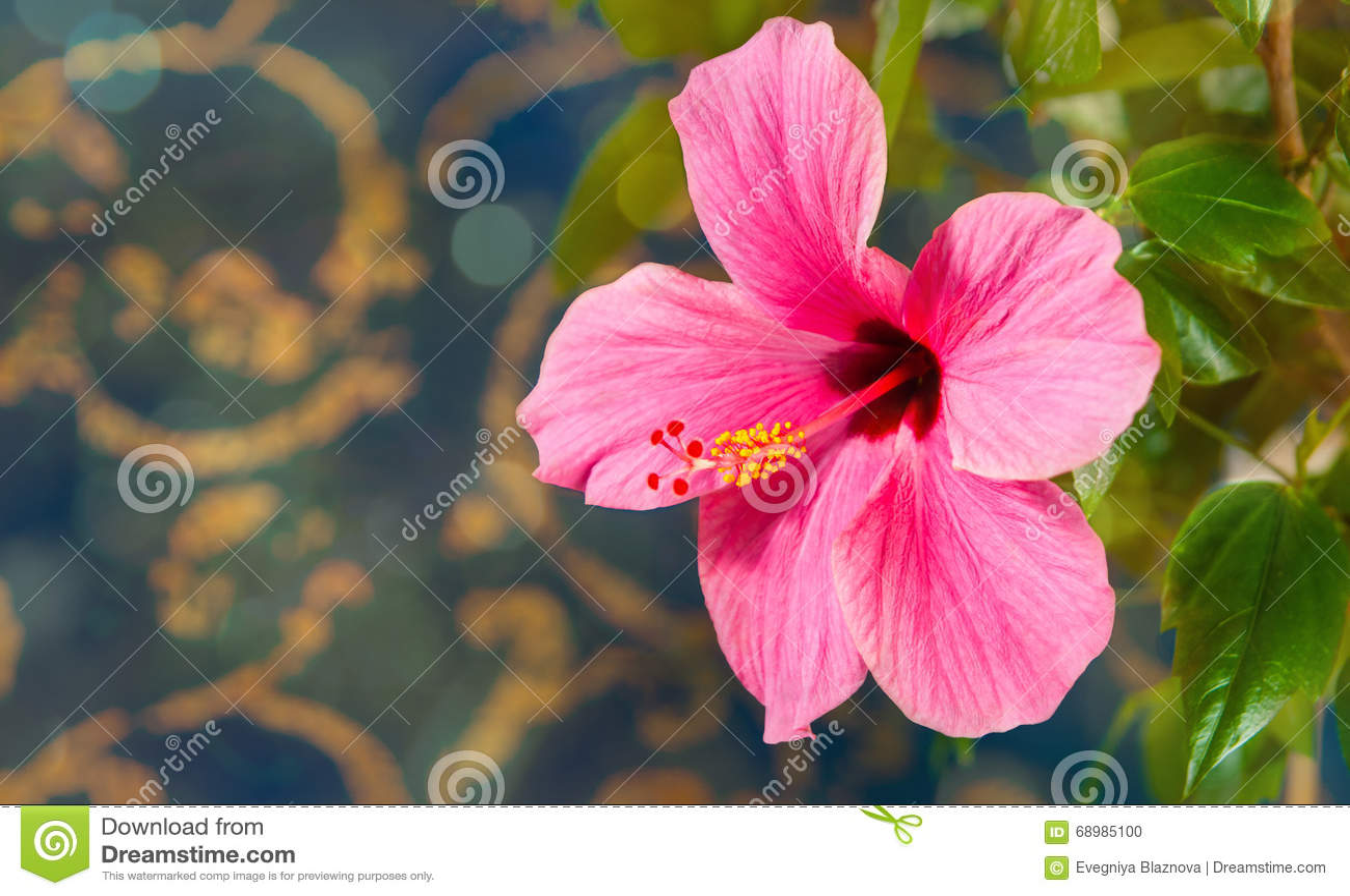 Belle grande fleur