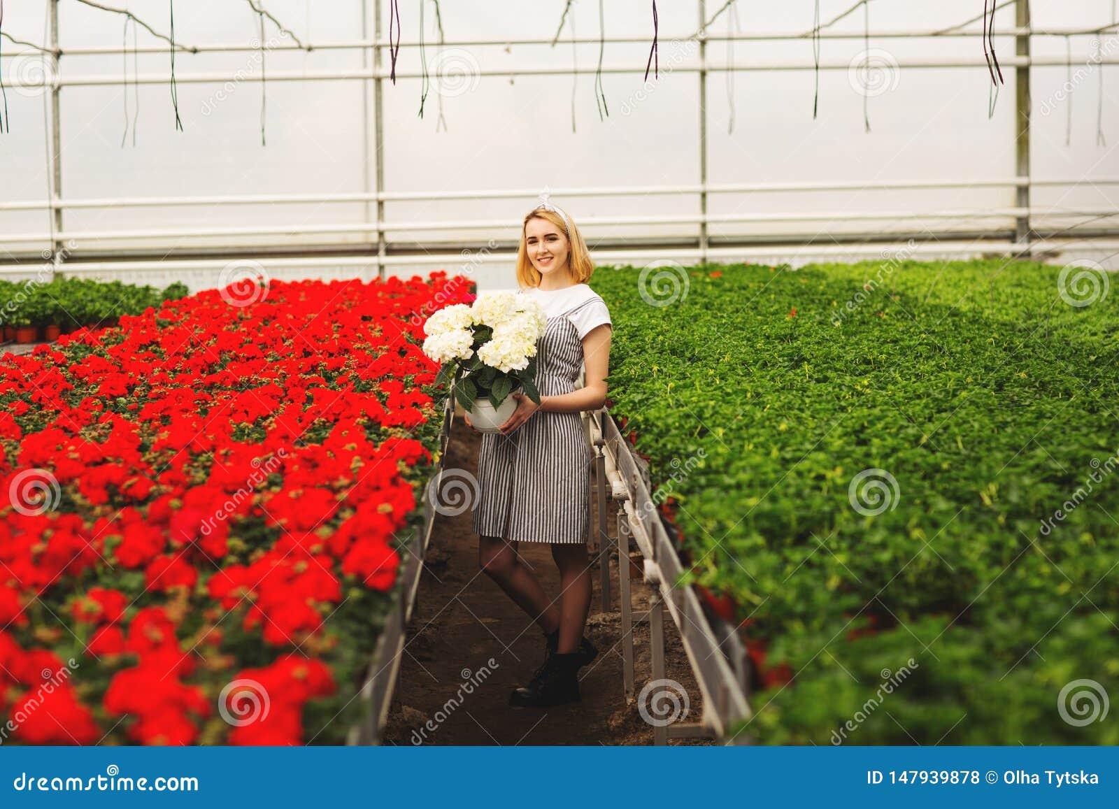 Belle jeune fille de sourire dans la robe, ouvri?re avec des fleurs en serre chaude La fille tient les fleurs blanches