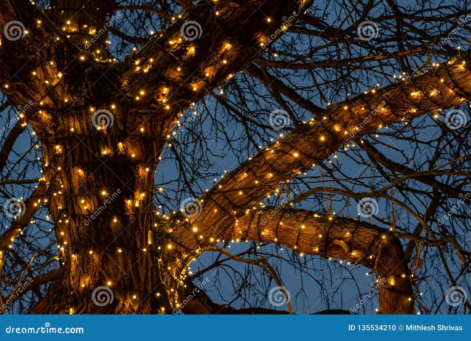 Belle luci di Natale intorno ai rami di albero contro i precedenti blu-chiaro del cielo nella notte