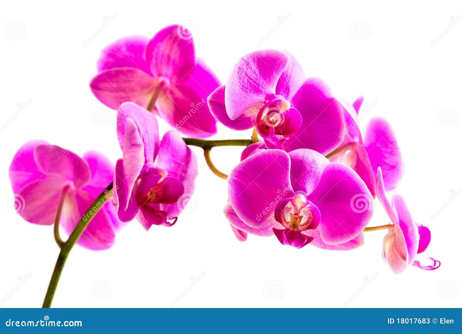 Belle Orchidee Rose De Fleur Image Stock Image Du Present
