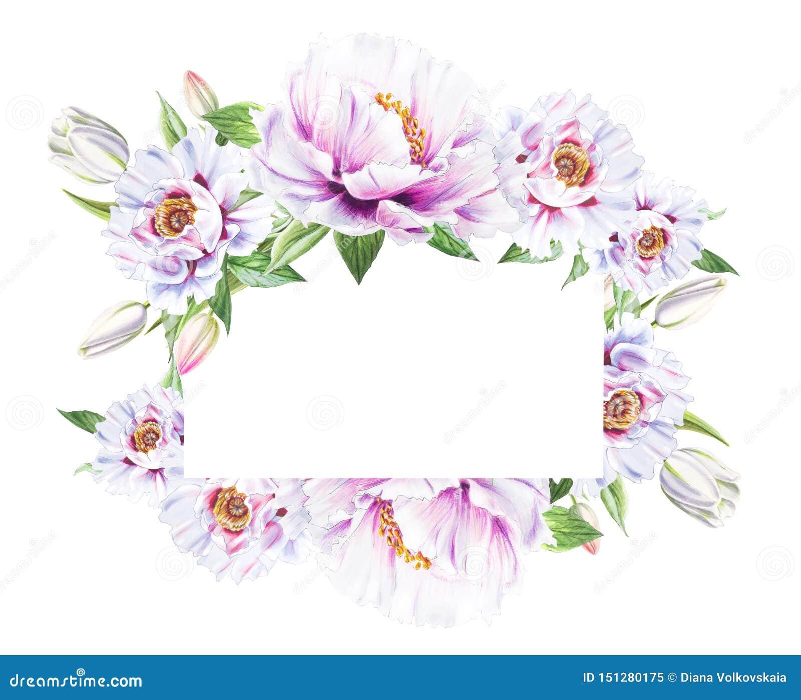Belle pivoine blanche et cadre blanc de tulipes Bouquet des fleurs Impression florale Dessin de marqueur