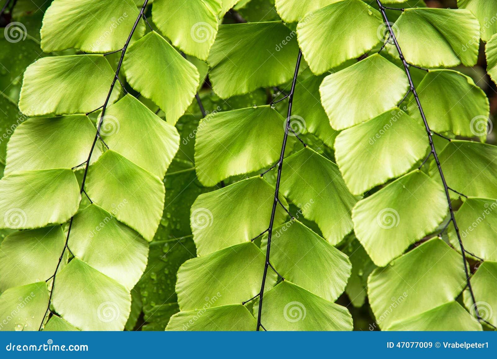Belle plante verte tropicale image stock image du lames for Plante jungle