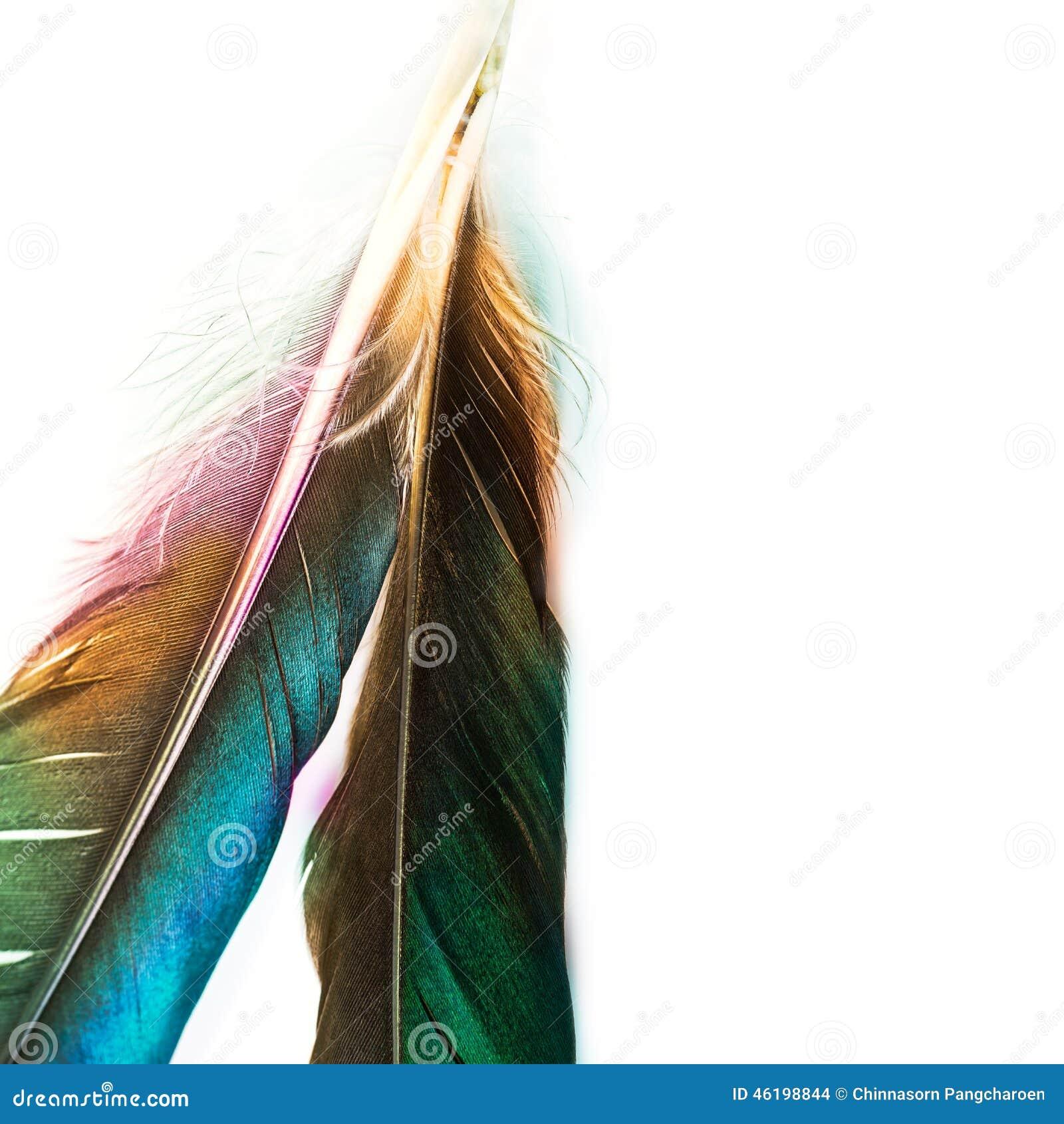 belle plume d 39 oiseau photo stock image du detail configuration 46198844. Black Bedroom Furniture Sets. Home Design Ideas