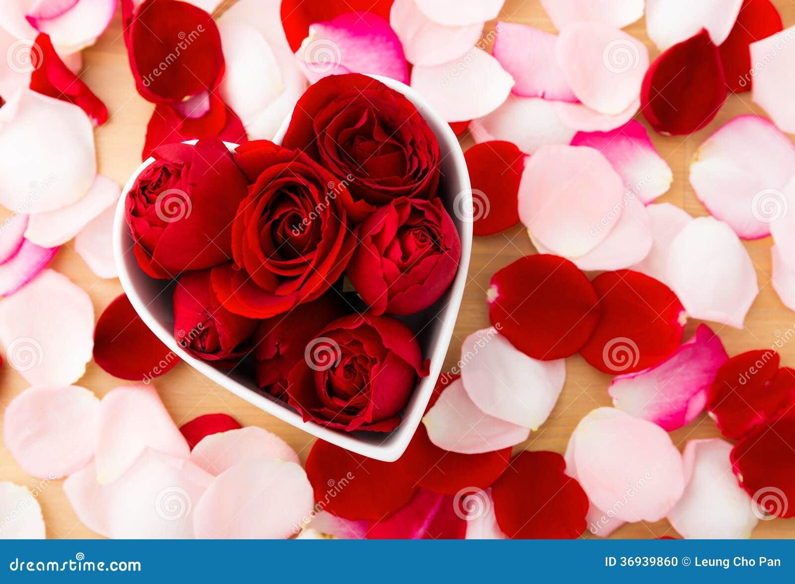 Belle rose de rouge l 39 int rieur de la cuvette de forme de coeur avec le p tale cot photo - Les plus belles images de saint valentin ...