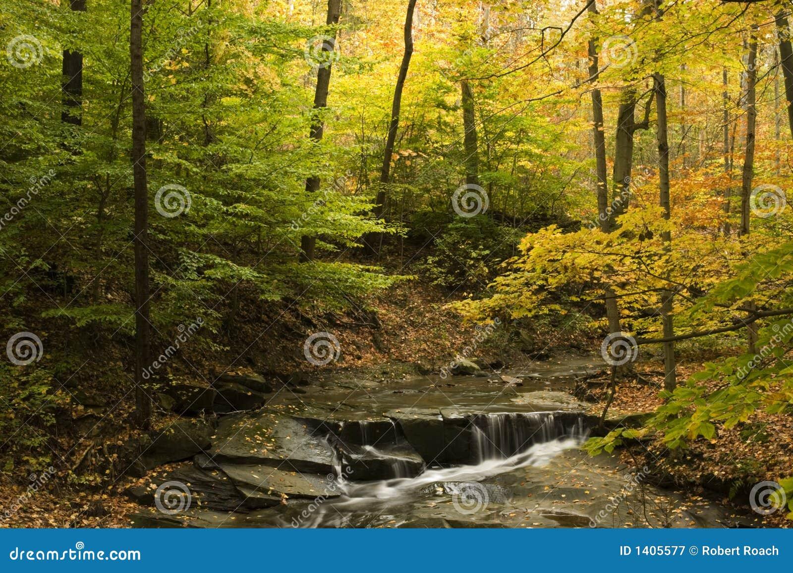 Belle scène d automne avec la vapeur et le feuillage d automne
