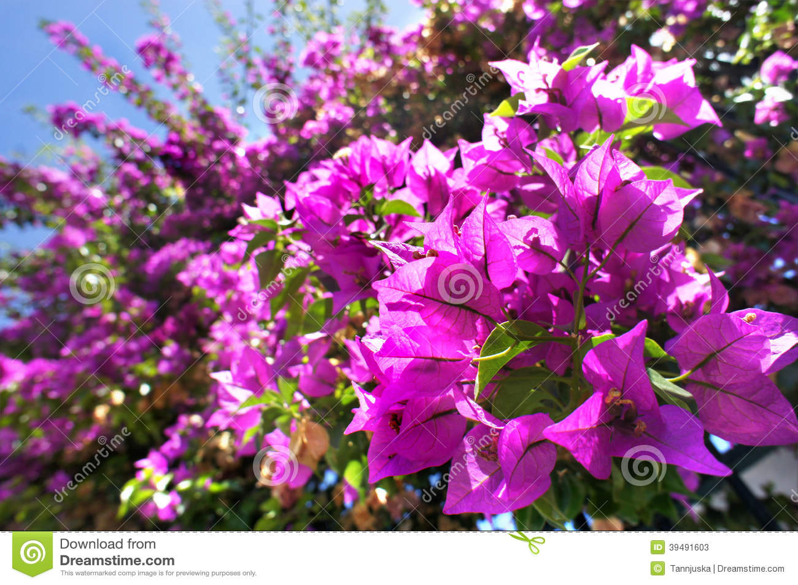 belle terrasse m diterran enne avec les fleurs roses photo stock image 39491603. Black Bedroom Furniture Sets. Home Design Ideas