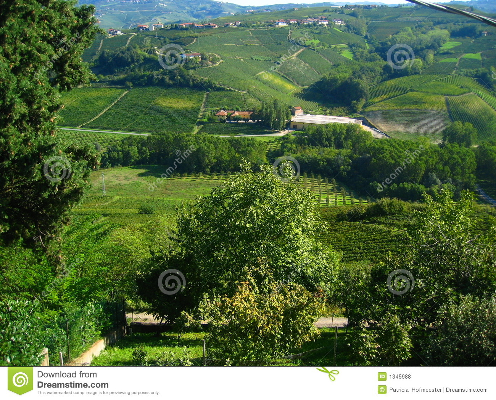 Belle vigne italiane