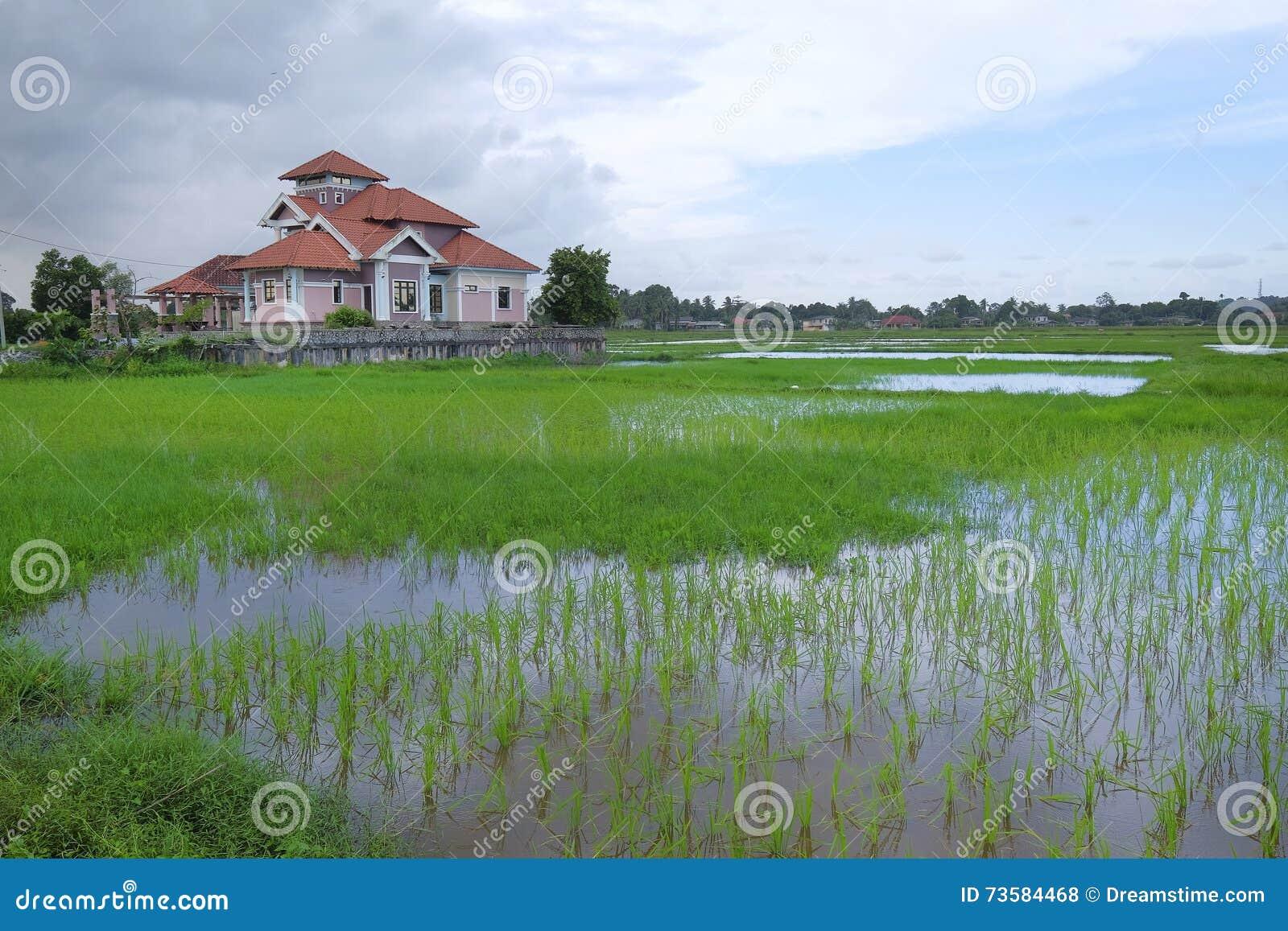 Belle vue de maison de pavillon au champ de rizi re en for Site de conception de maison