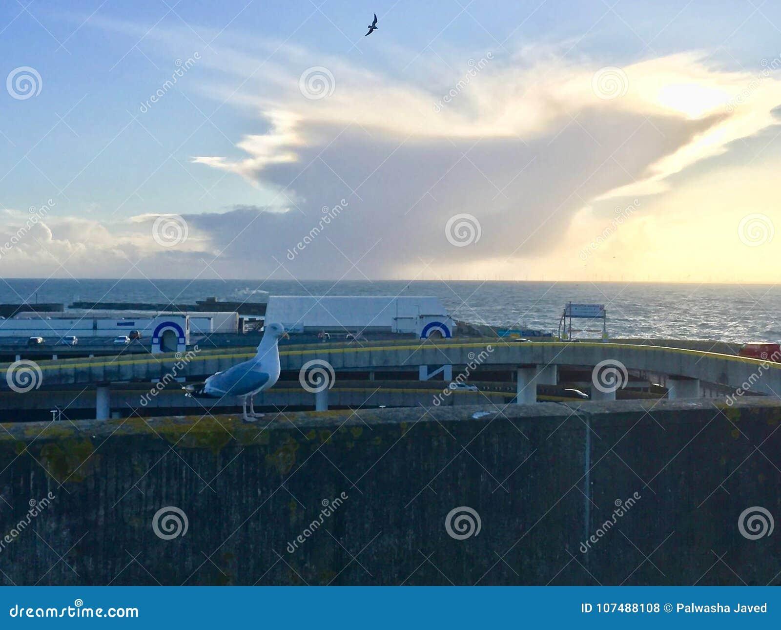 Belle vue de pigeon à la station de vacances de Brighton Pier