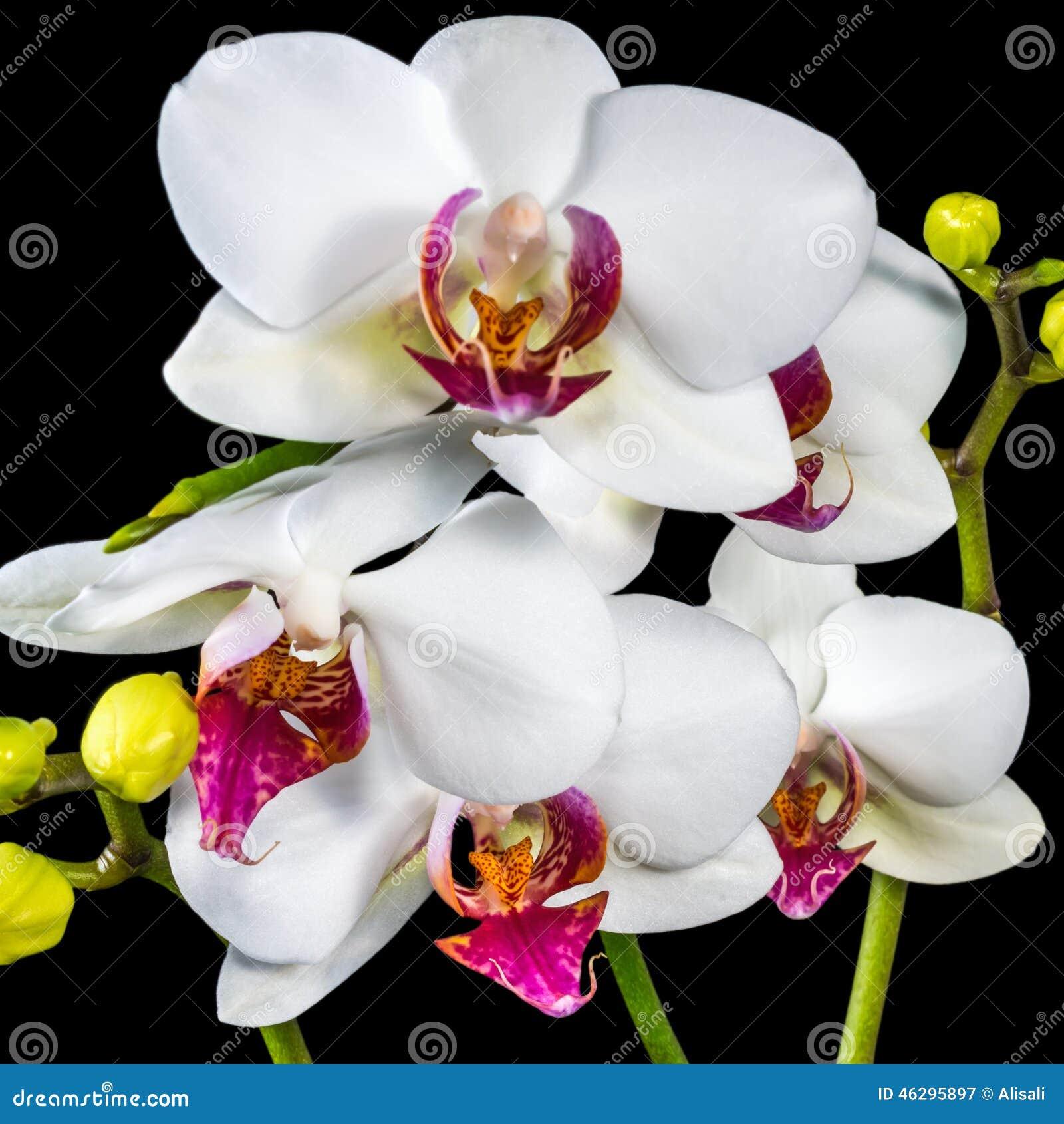 """Résultat de recherche d'images pour """"tres belles images d'orchidées"""""""