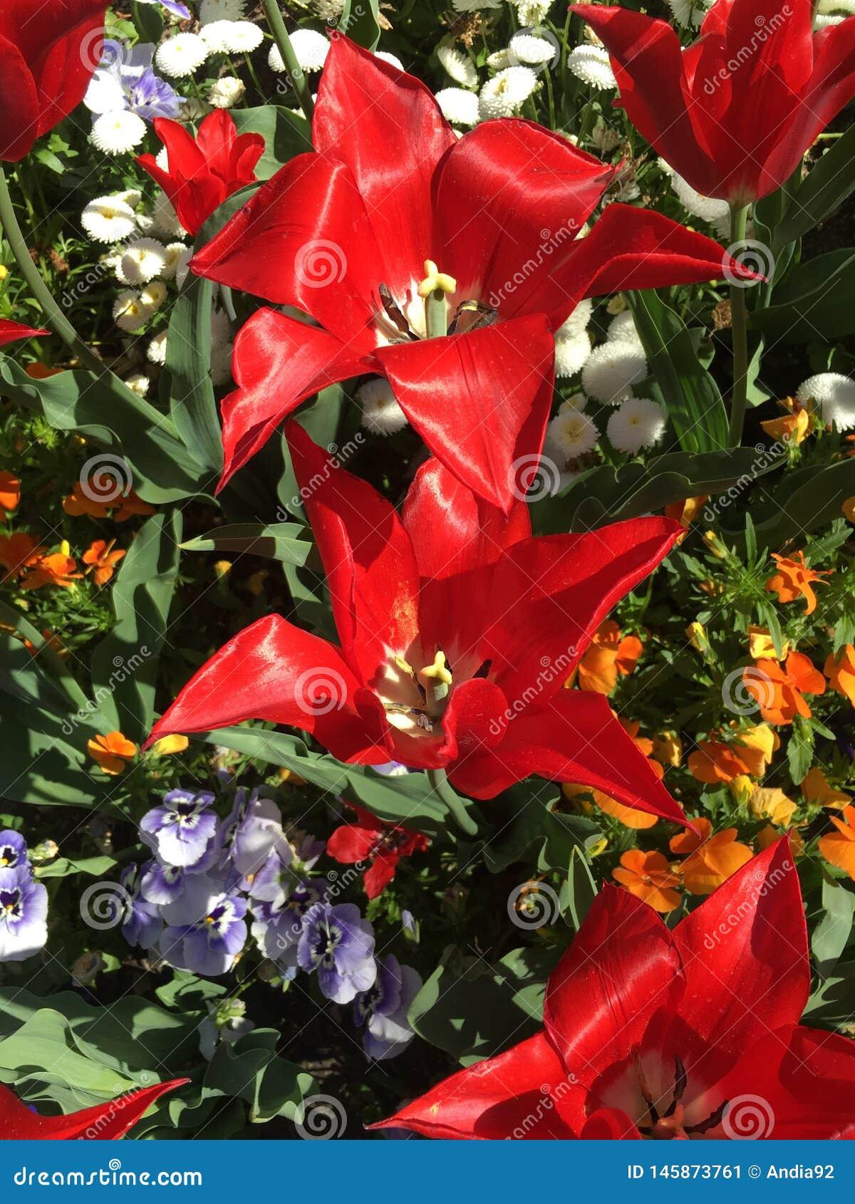 Belles et ?tonnantes fleurs