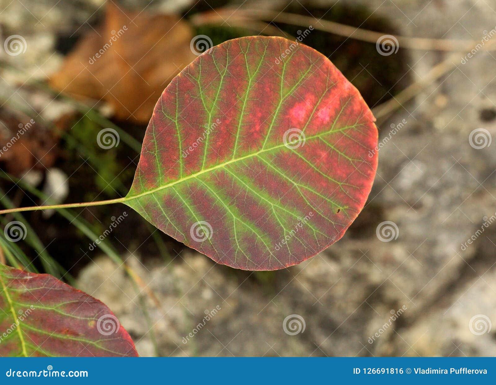 Belles feuilles d automne au parc national de lacs Plitvice