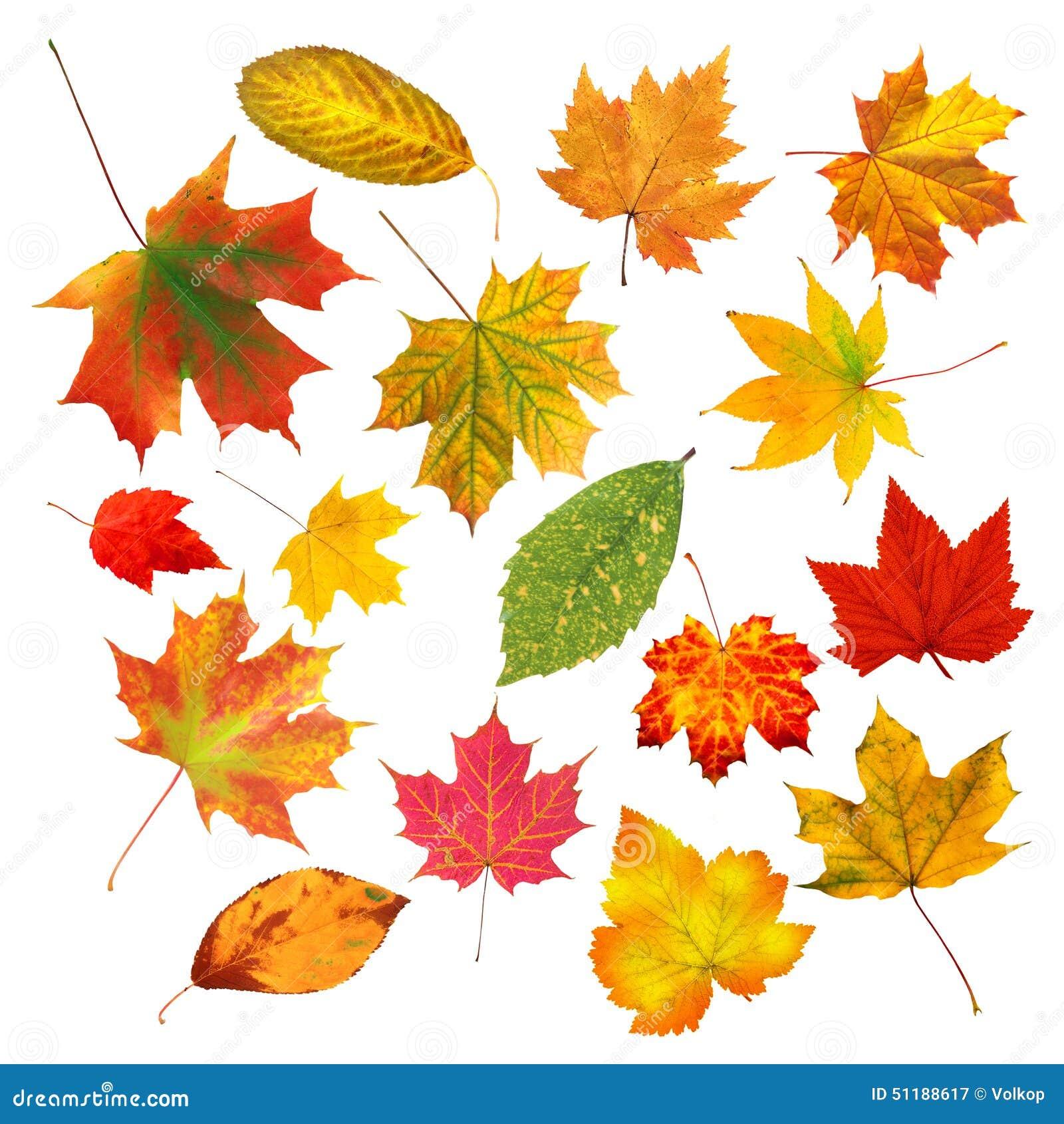 Belles feuilles d 39 automne color es de collection d 39 isolement sur le blanc image stock image du - Image automne gratuite imprimer ...