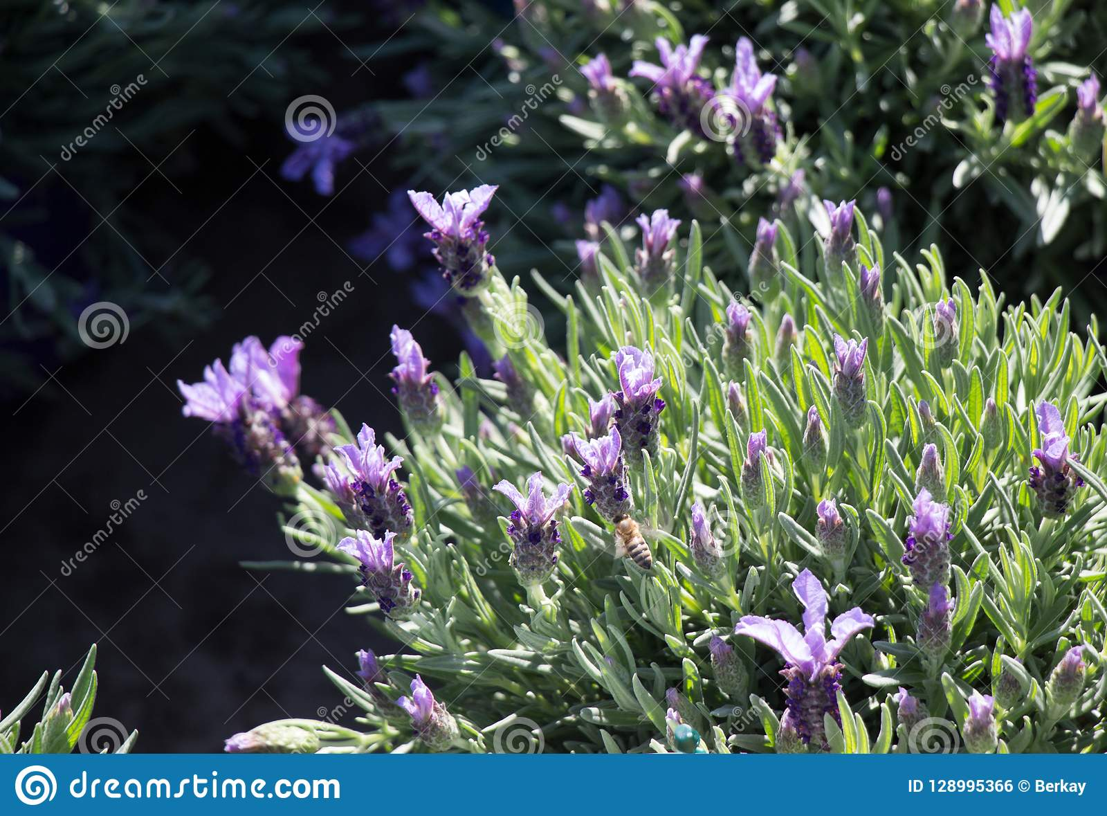 Belles fleurs comme fond