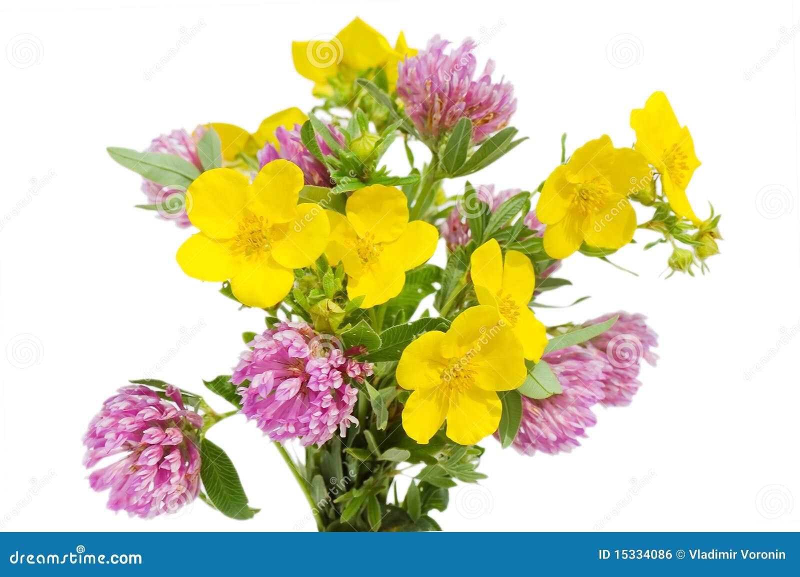 Belles fleurs d isolement au-dessus du blanc