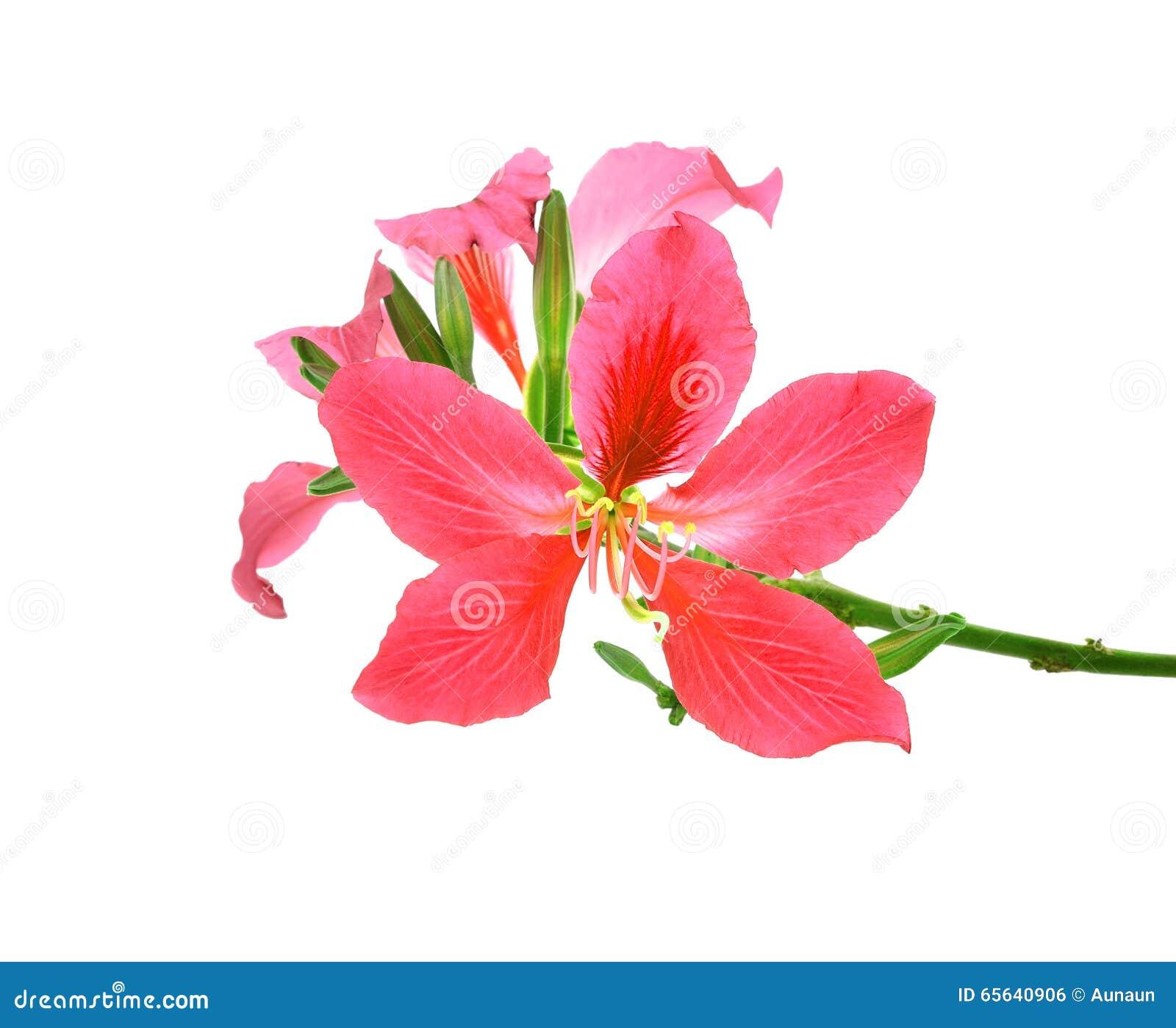 Belles fleurs d isolement sur le fond blanc
