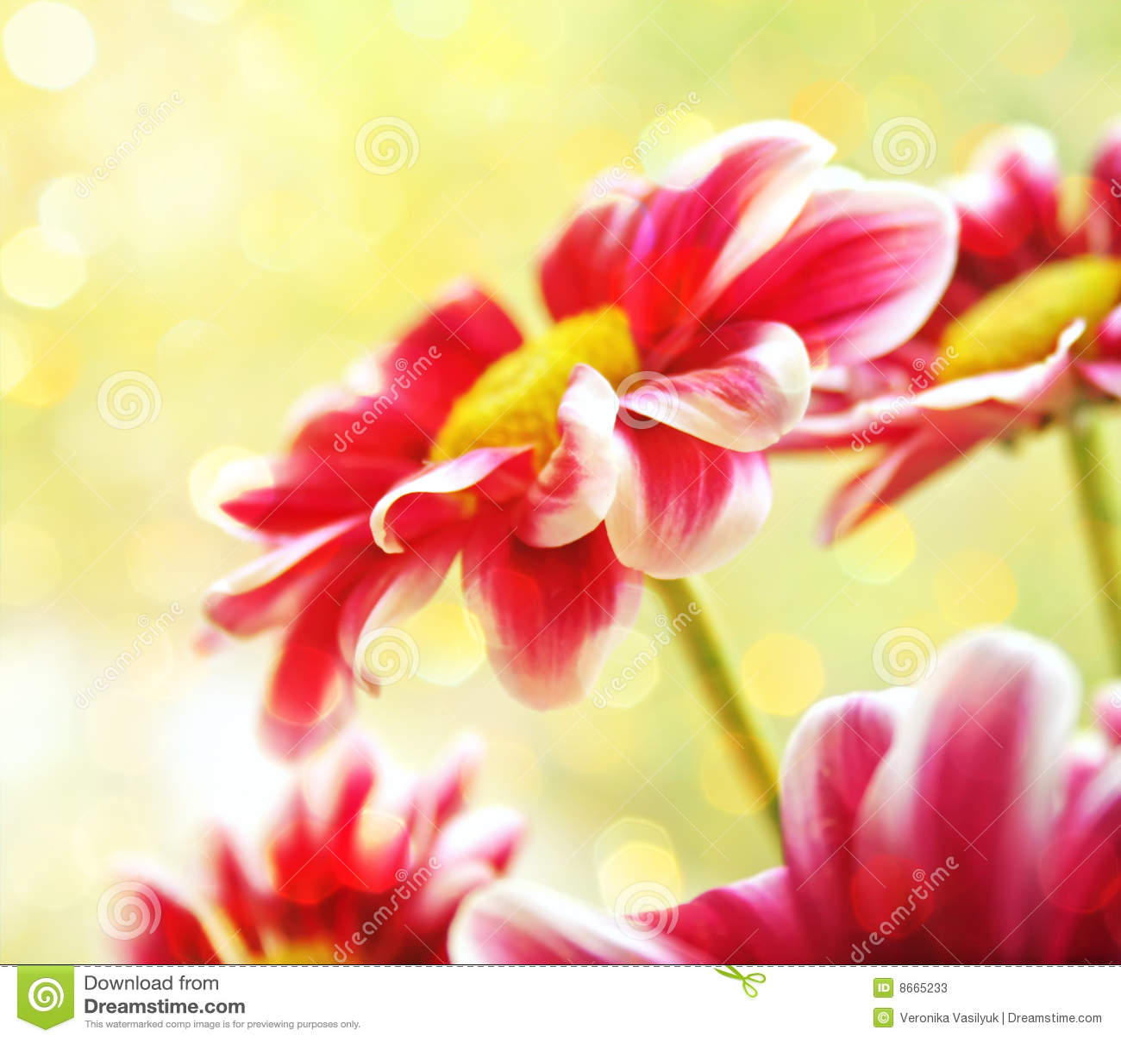 Belles fleurs de jardin