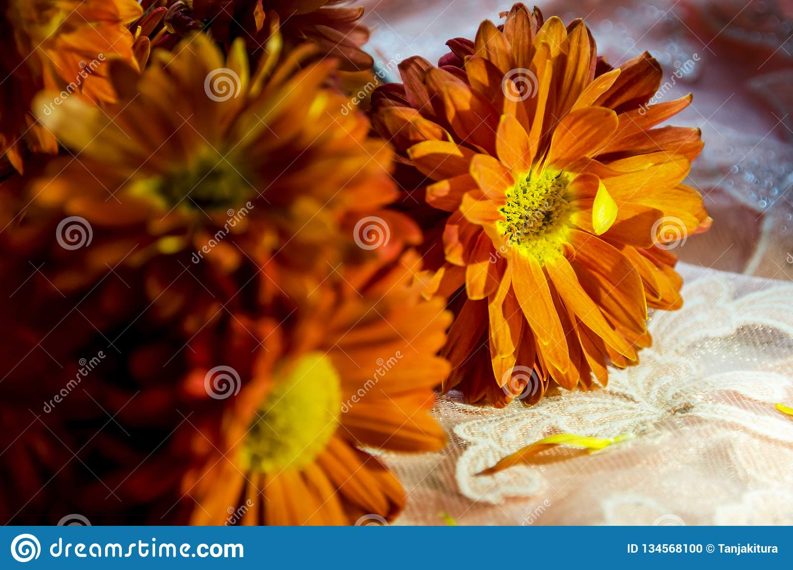 Belles fleurs oranges miroitant au soleil