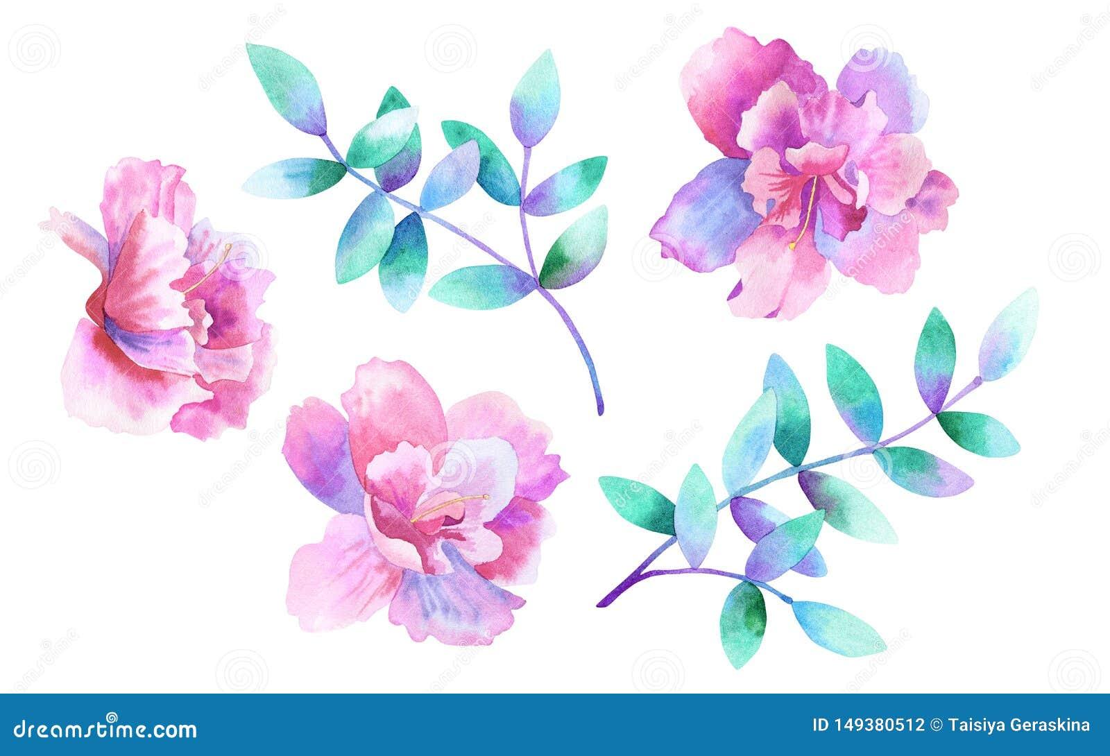 Belles fleurs roses pourpres et branches pourpres vertes Positionnement floral Éléments pour la conception romantique Aquarelle t