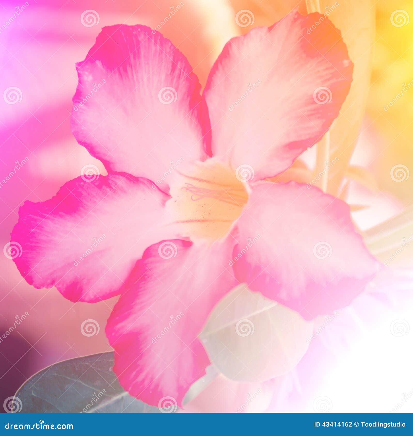 belles fleurs sauvages de couleur vive dans le style doux photo stock image 43414162. Black Bedroom Furniture Sets. Home Design Ideas