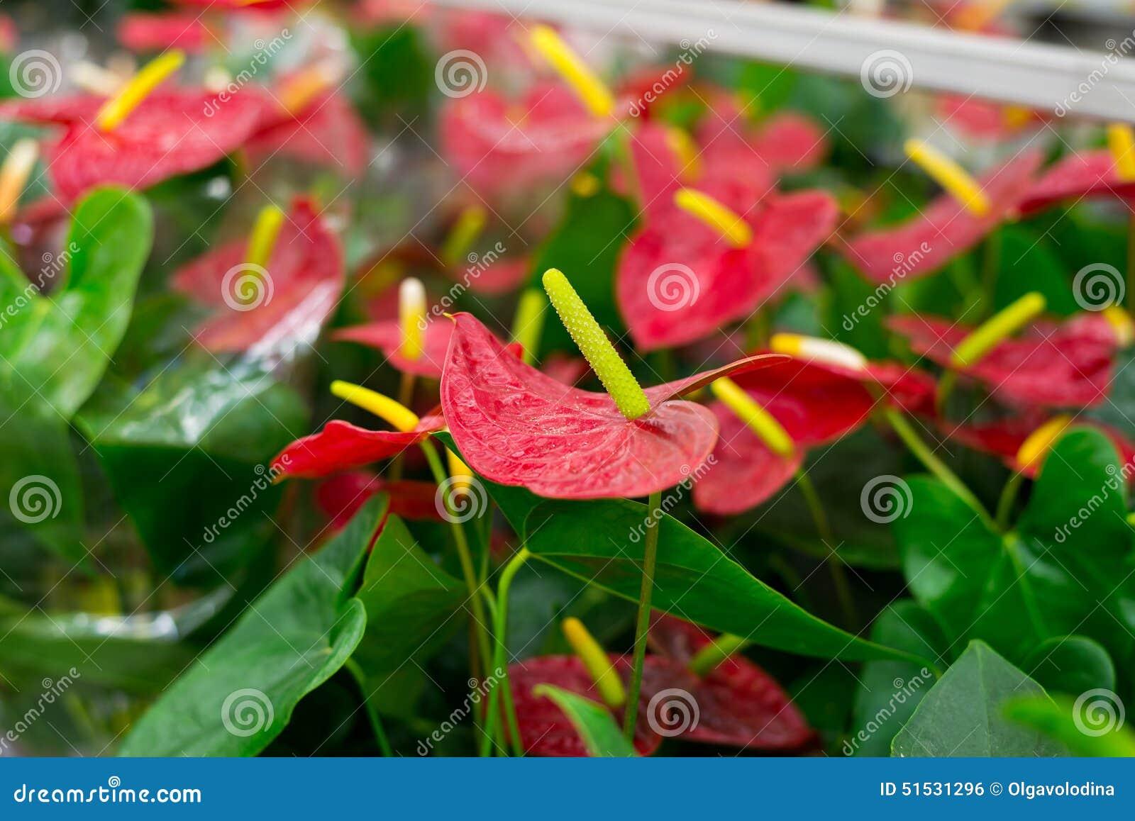 Belles Fleurs Tropicales Dans