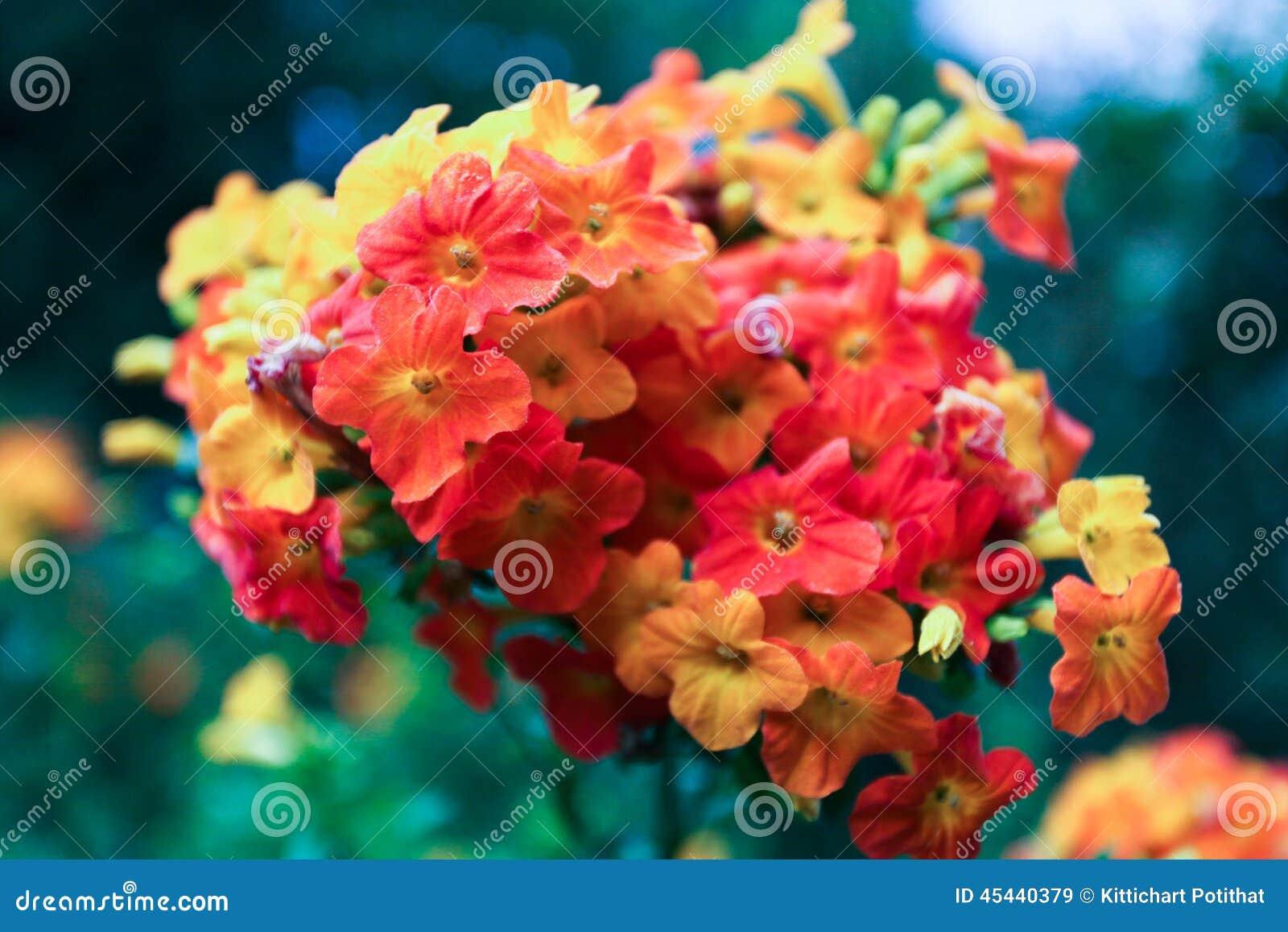 Download Belles Petites Fleurs Colorées Image stock , Image du coloré,  fleurs 45440379