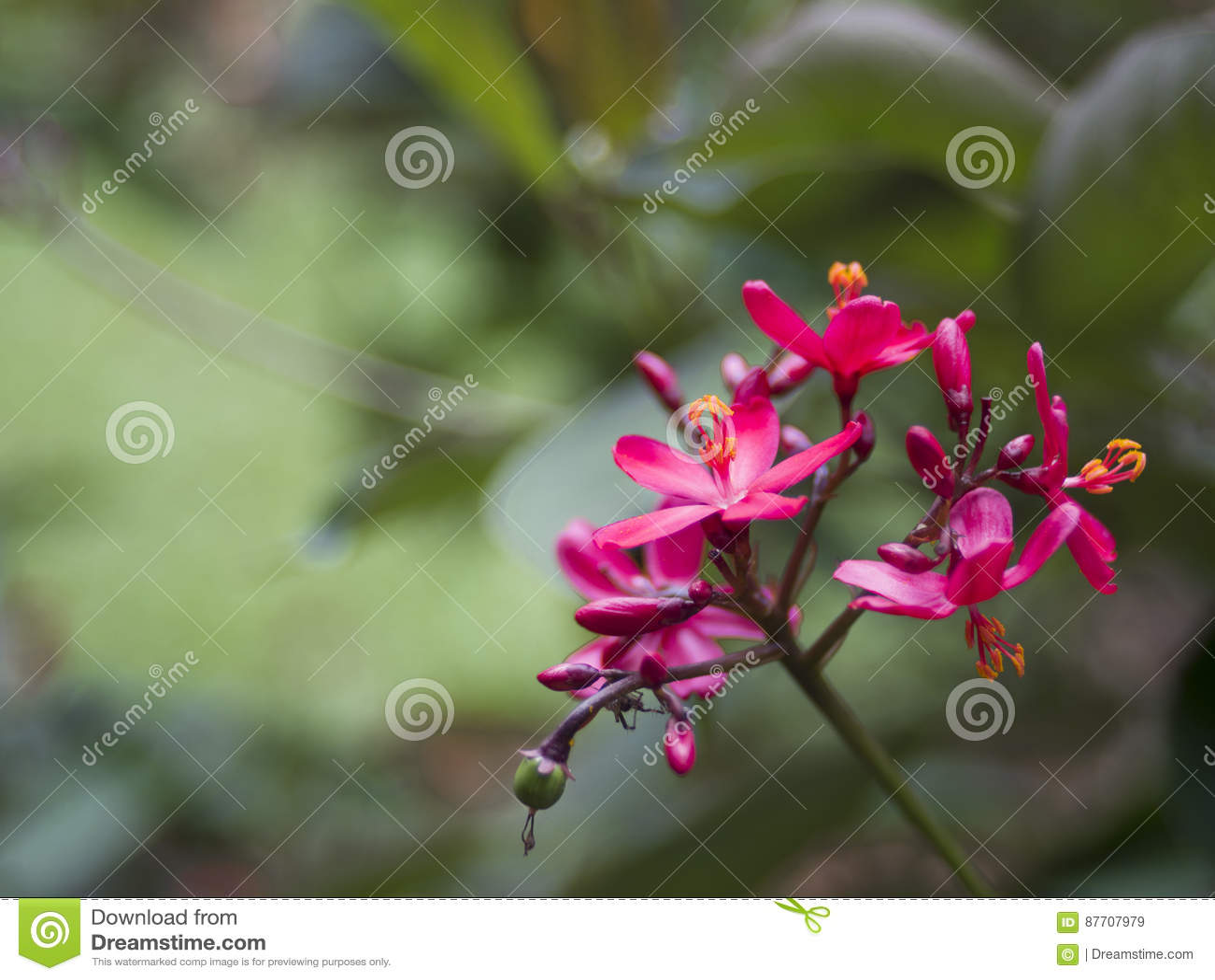 Belles petites fleurs tropicales fleurissant en Indonésie