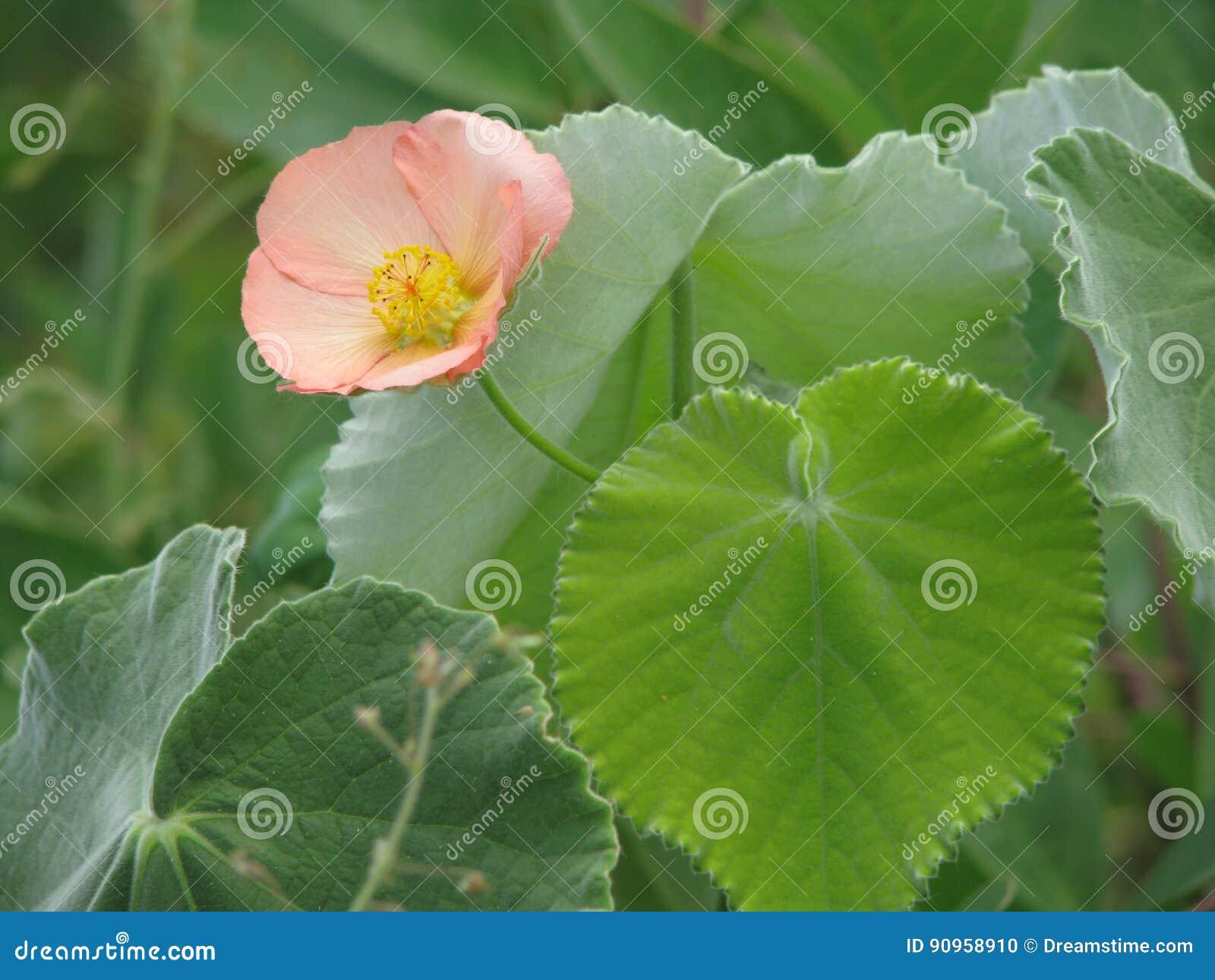 Lujoso Diseño Simple Flor Para Las Uñas Componente - Ideas Para ...