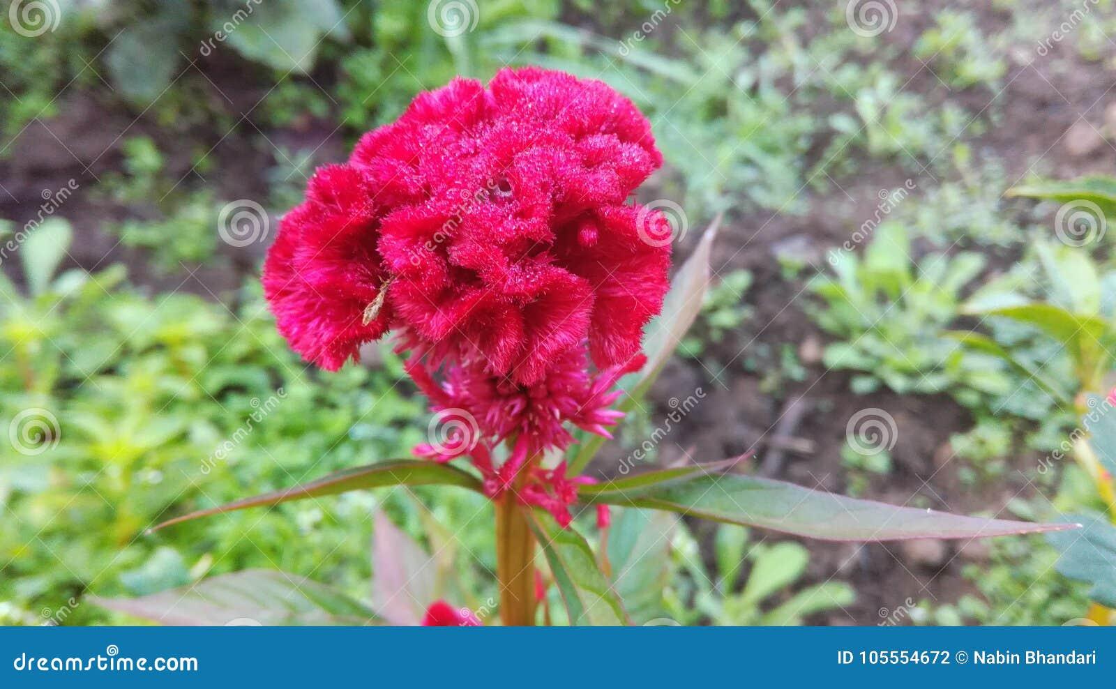 Belleza escénica de la flor floreciente