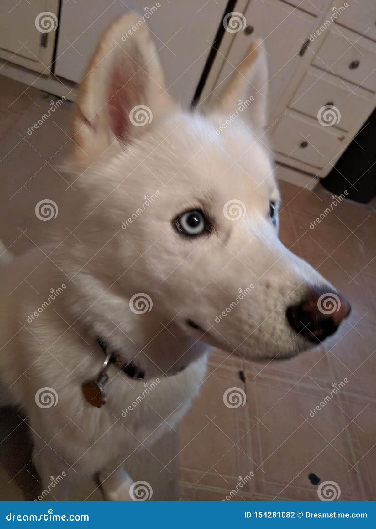 Bellezza del cucciolo