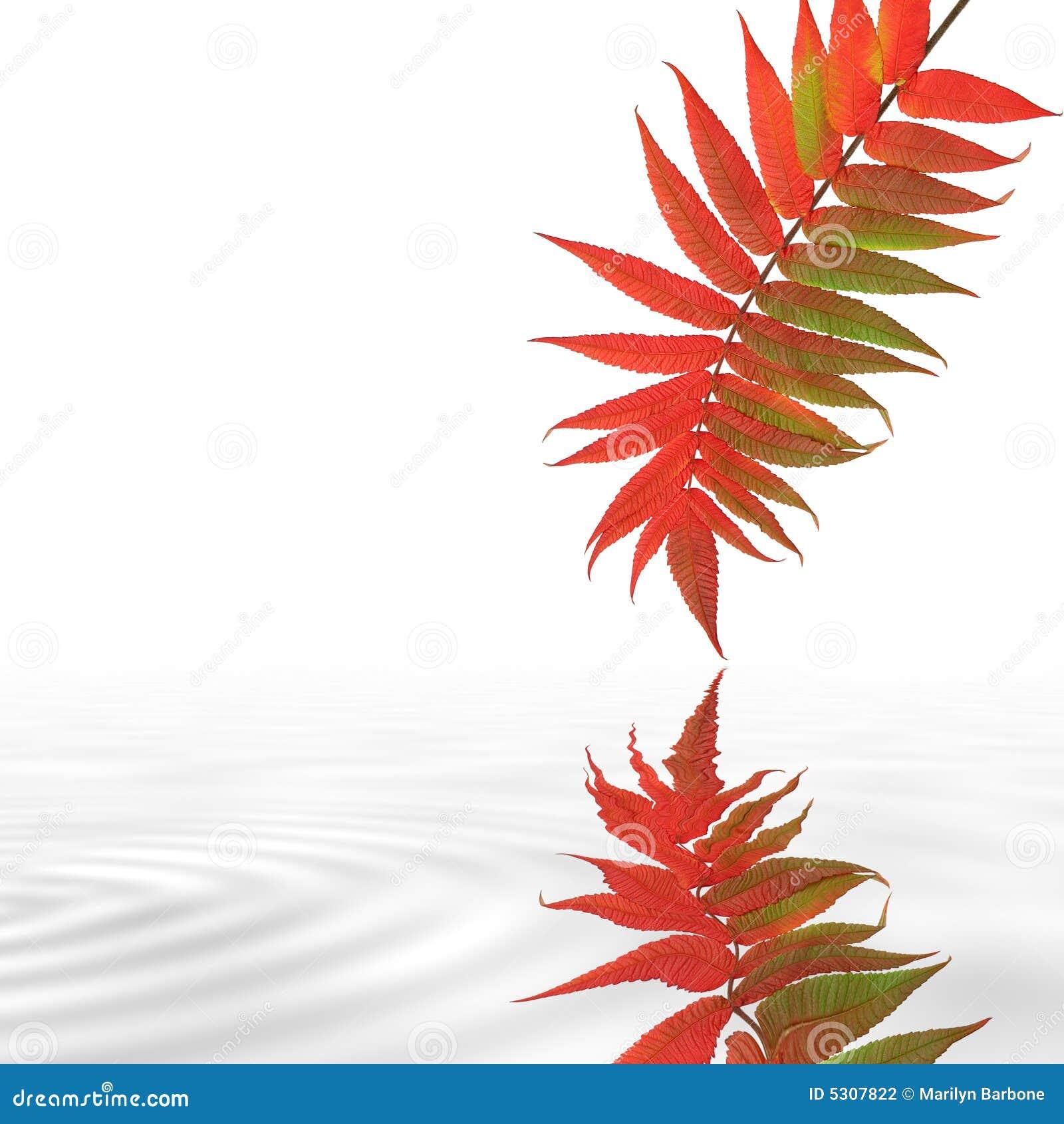 Download Bellezza di autunno fotografia stock. Immagine di caduta - 5307822